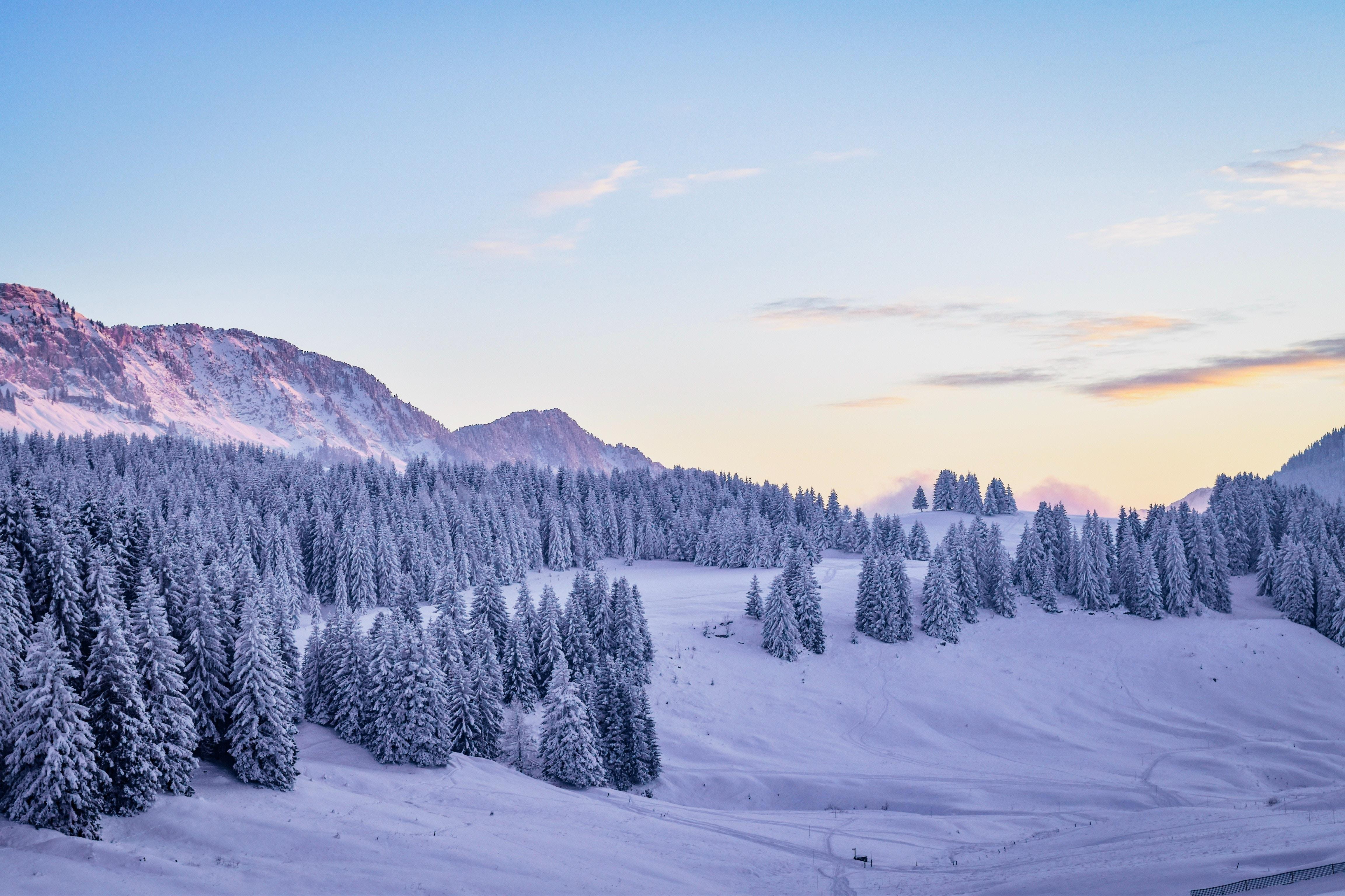 112257 скачать обои Природа, Зима, Снег, Заснеженный, Елки - заставки и картинки бесплатно