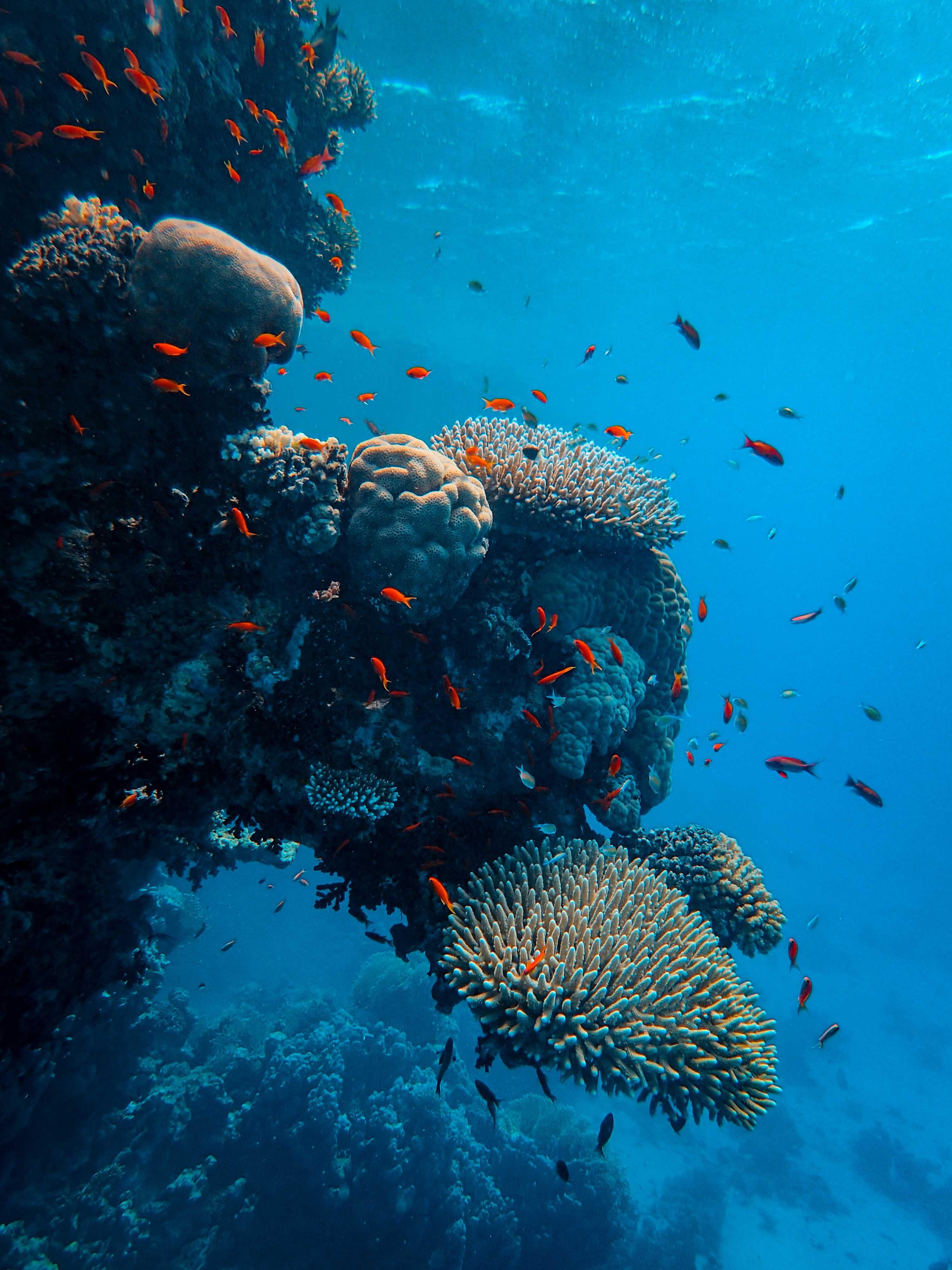 150809 Заставки и Обои Рыбы на телефон. Скачать Рыбы, Природа, Кораллы, Океан, Подводный Мир картинки бесплатно