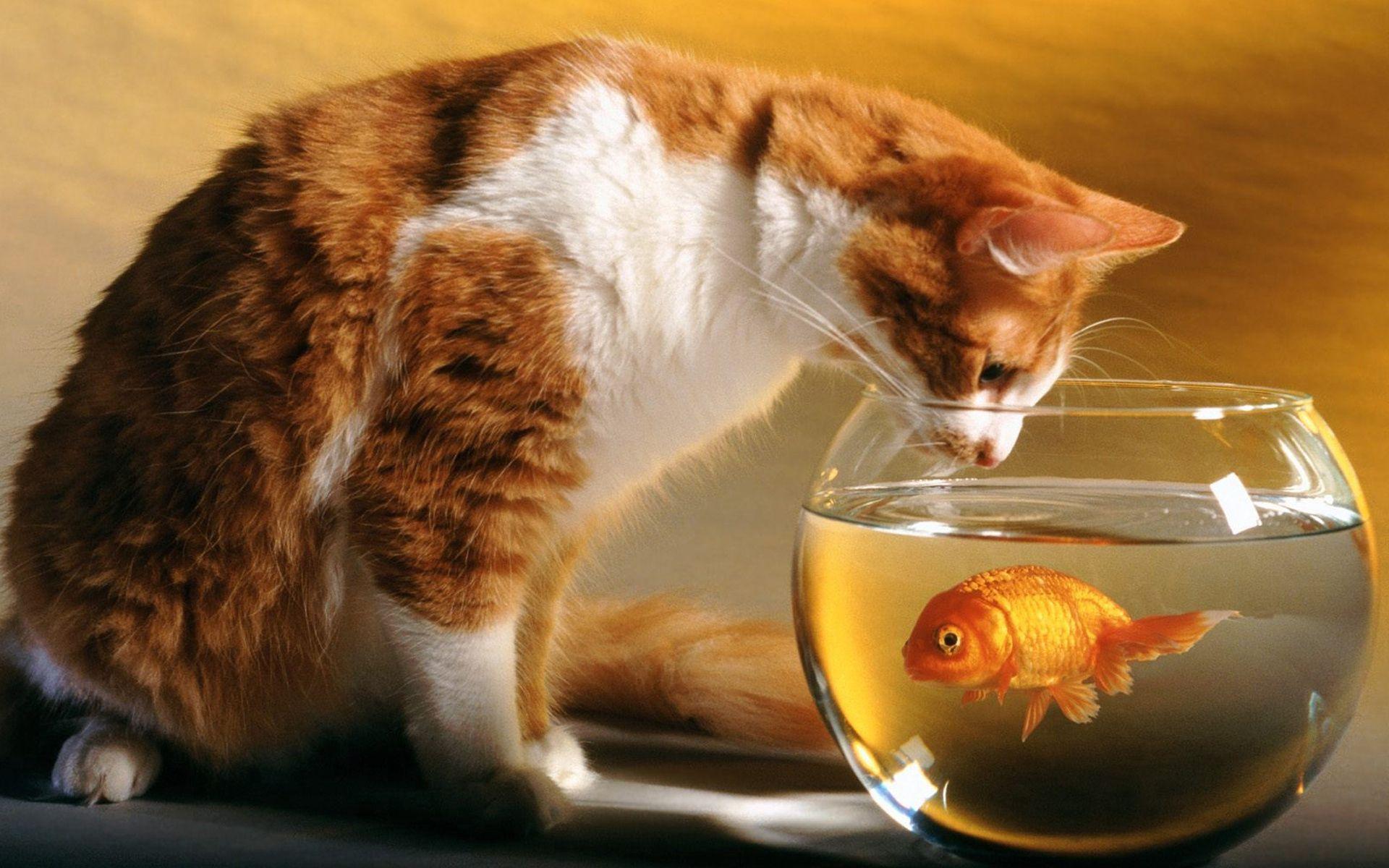 85712 Screensavers and Wallpapers Aquarium for phone. Download Animals, Cat, Hunting, Hunt, Aquarium, Curiosity pictures for free