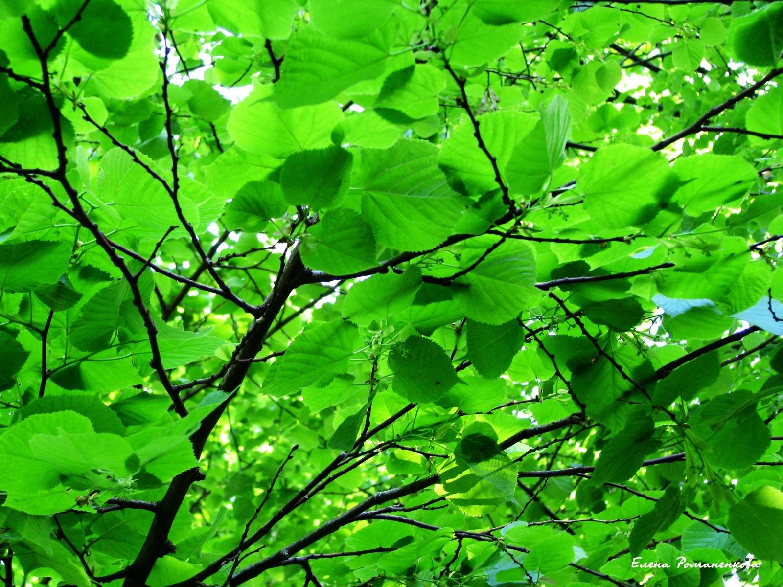 11251 скачать обои Растения, Листья - заставки и картинки бесплатно
