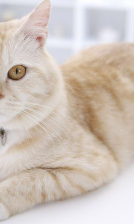 6242 download wallpaper Animals, Cats screensavers and pictures for free