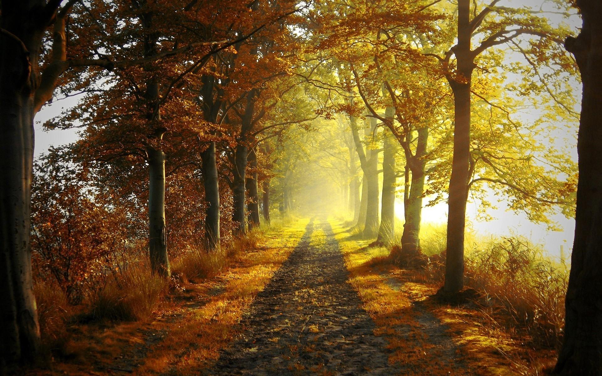 39683 скачать обои Пейзаж, Дороги, Осень - заставки и картинки бесплатно