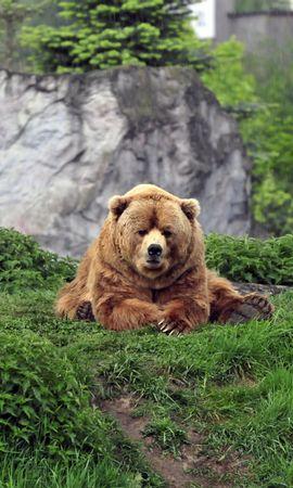 150855 скачать обои Животные, Медведь, Бурый, Трава, Прикольный, Лежать - заставки и картинки бесплатно