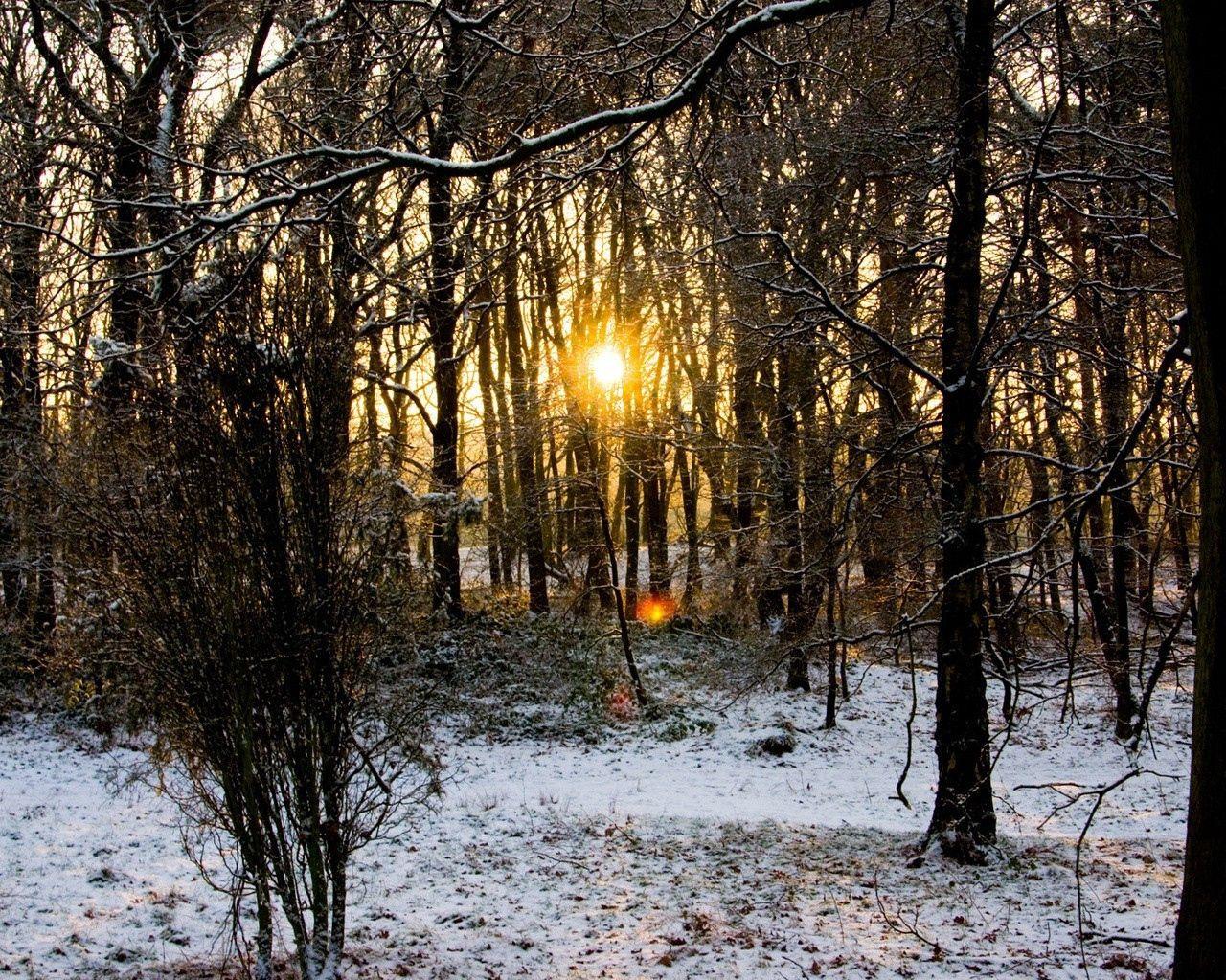90669 скачать обои Природа, Лес, Деревья, Ветки, Осень, Снег, Рассвет, Холод, Солнце - заставки и картинки бесплатно
