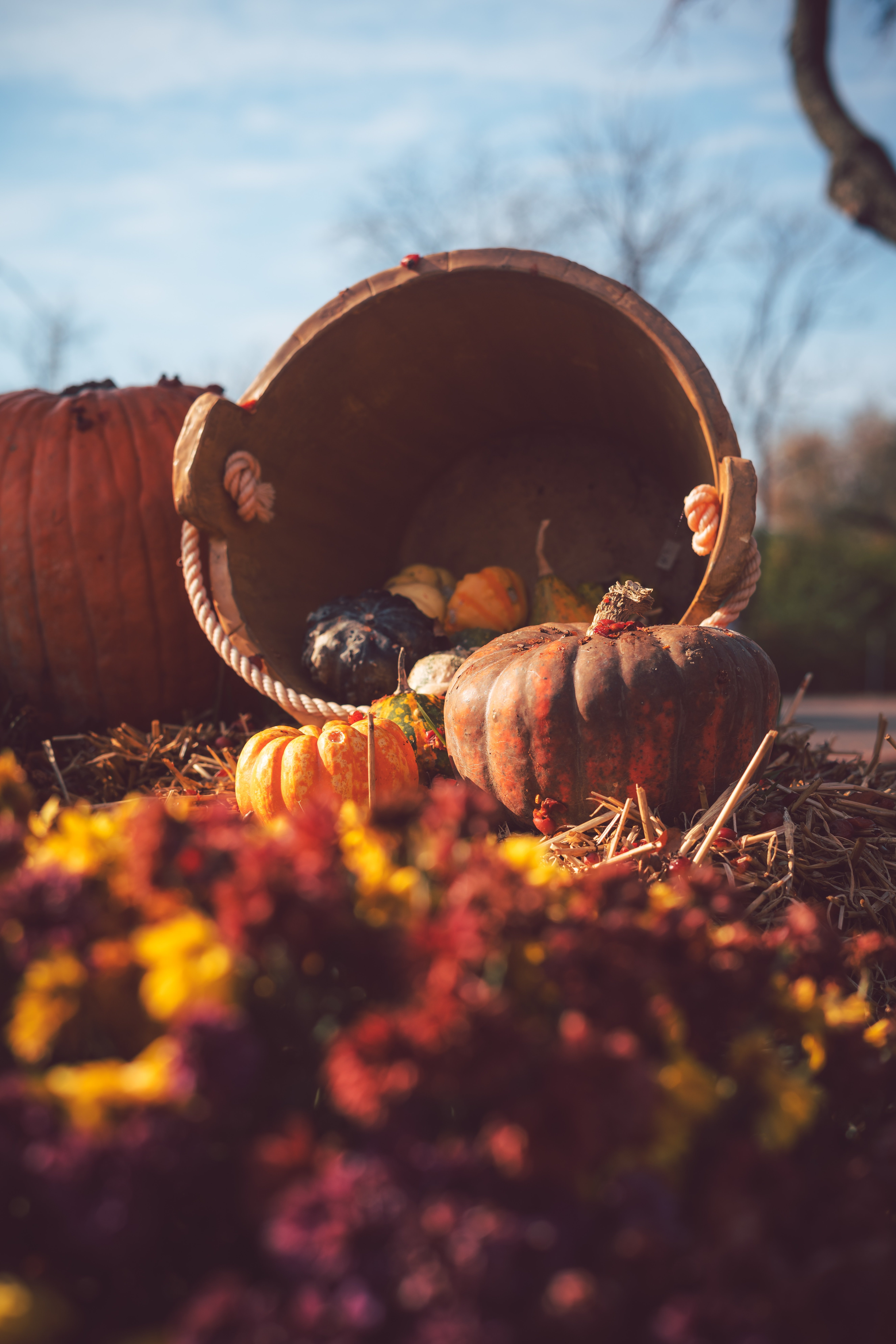 54669 download wallpaper Autumn, Pumpkin, Miscellanea, Miscellaneous, Basket, Harvest, Straw screensavers and pictures for free