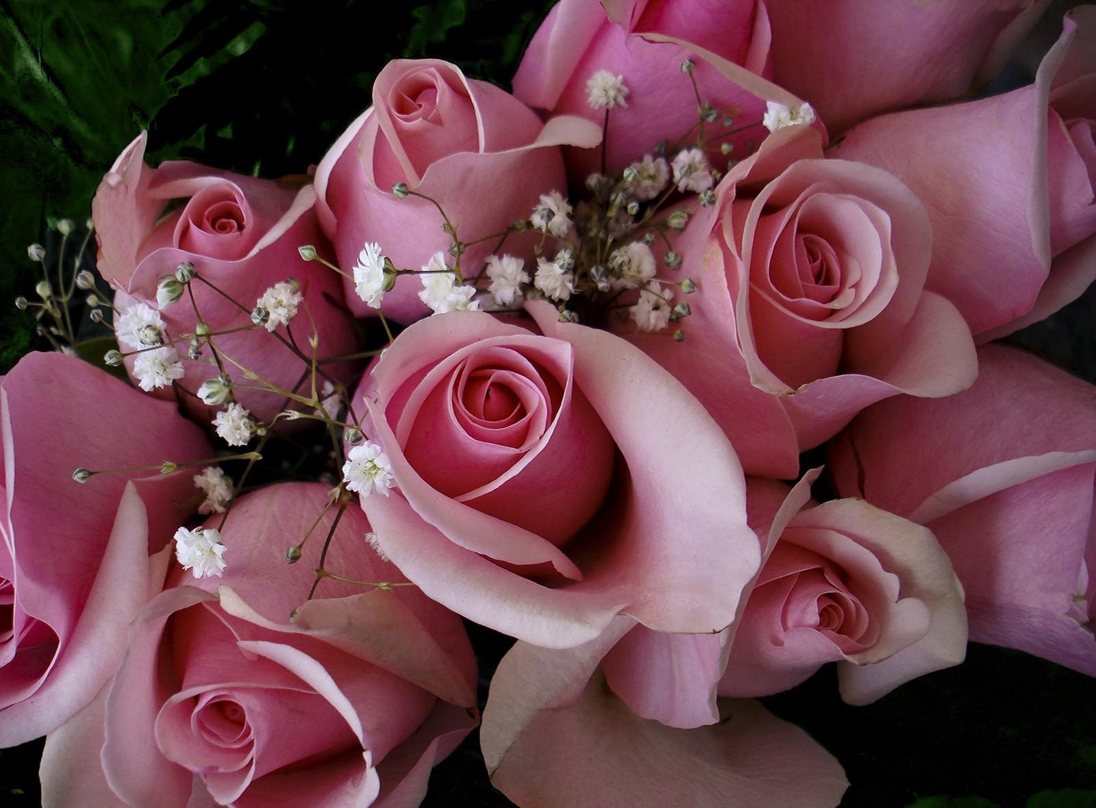 51711 Screensavers and Wallpapers Bouquet for phone. Download Flowers, Roses, Pink, Bouquet, Gypsophilus, Gipsophile, Buds pictures for free