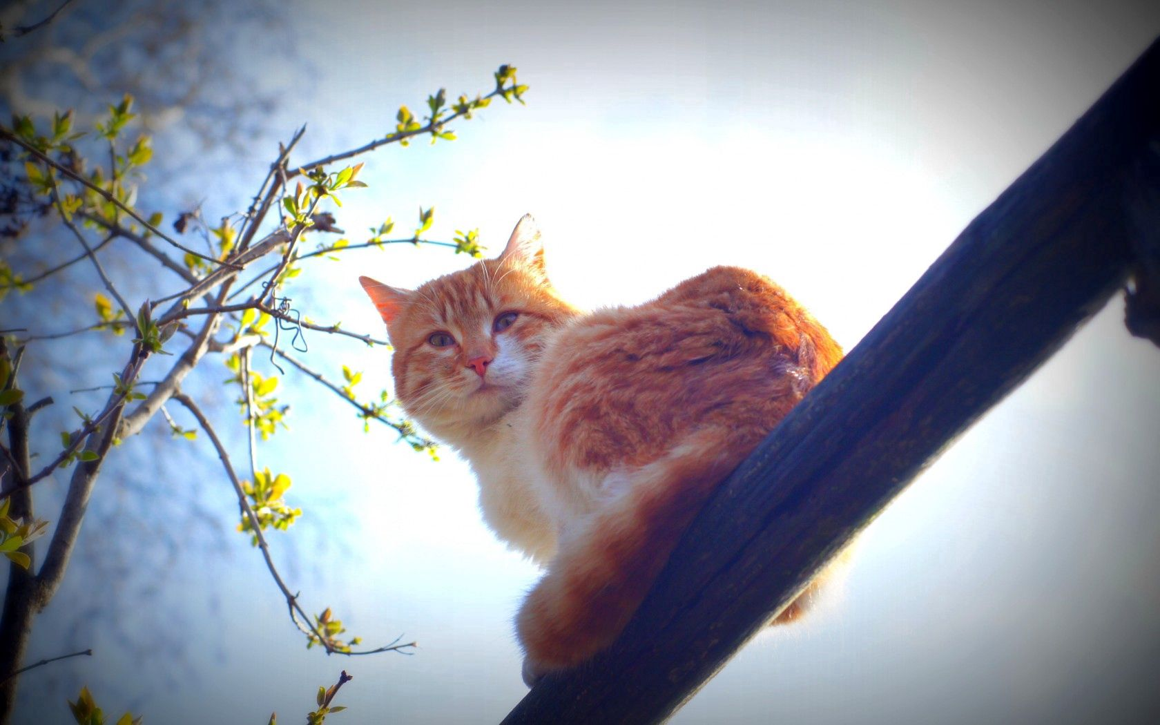 84609 download wallpaper Animals, Spring, Cat, Nature, Morning, Mustache, Moustache, Sun screensavers and pictures for free