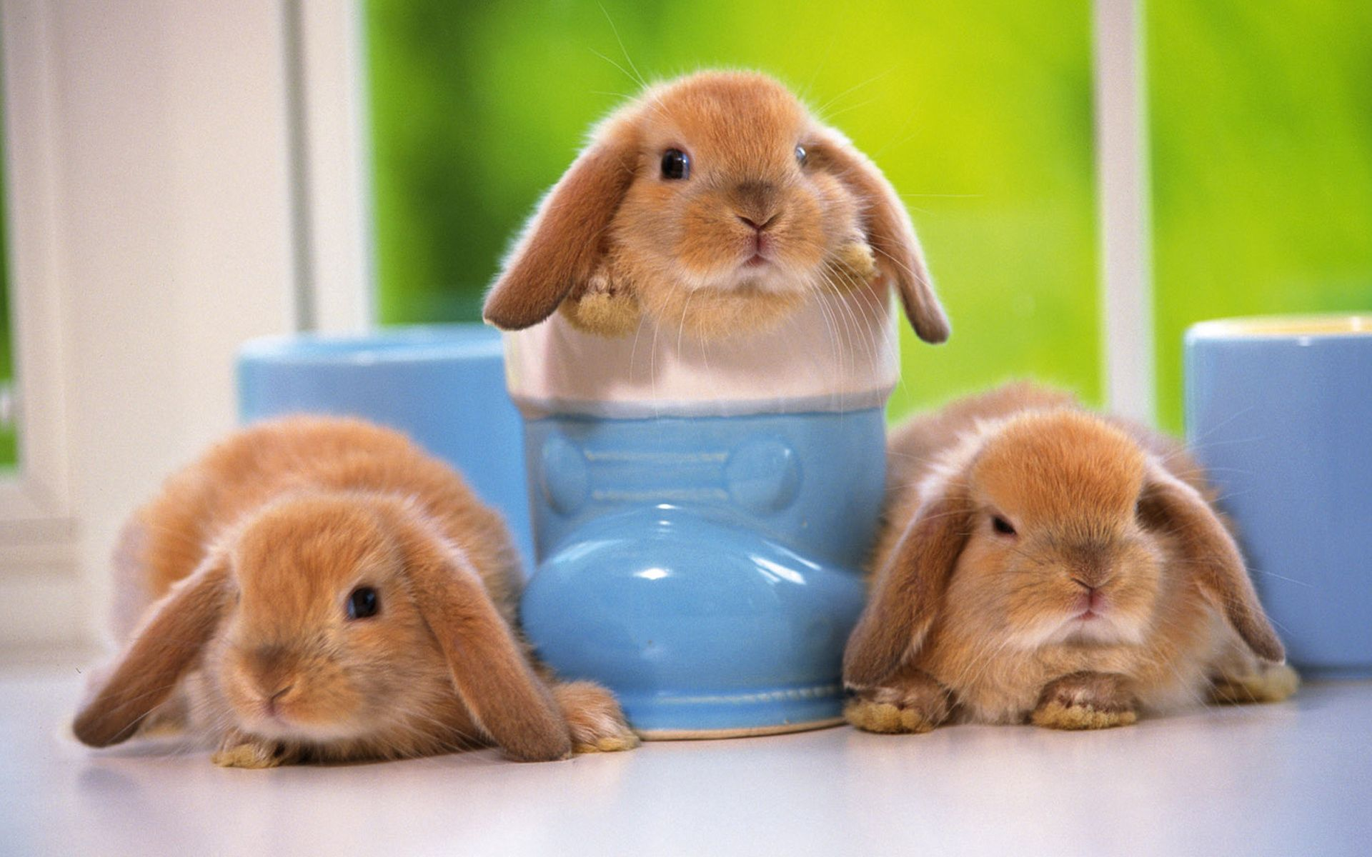 129745 download wallpaper Rabbits, Animals, Sit, Toddlers, Kids, Three screensavers and pictures for free
