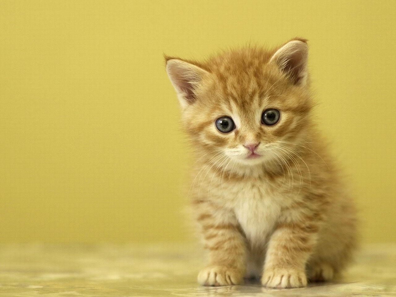 48303 скачать обои Животные, Кошки (Коты, Котики) - заставки и картинки бесплатно