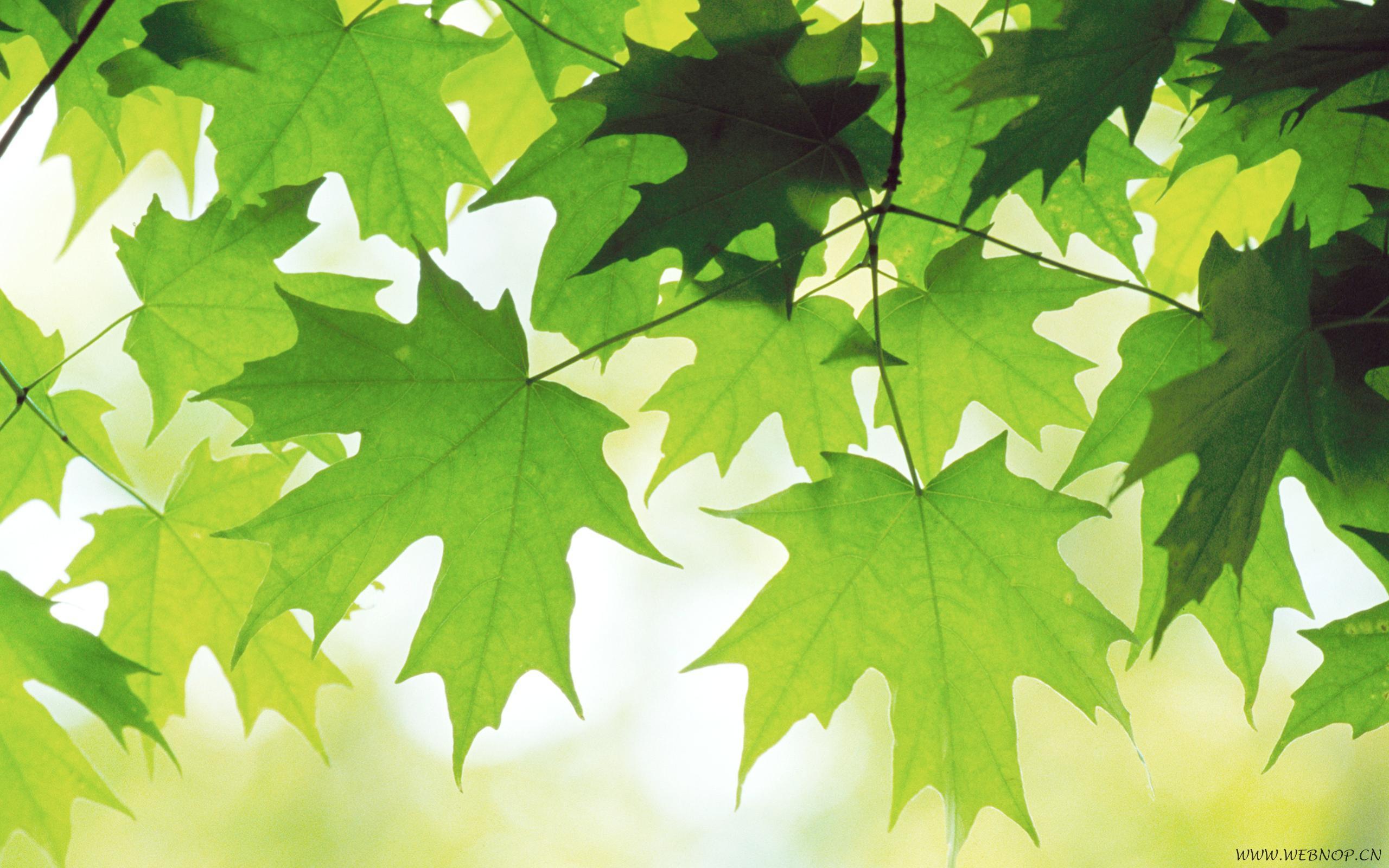27188 скачать обои Растения, Фон, Листья - заставки и картинки бесплатно