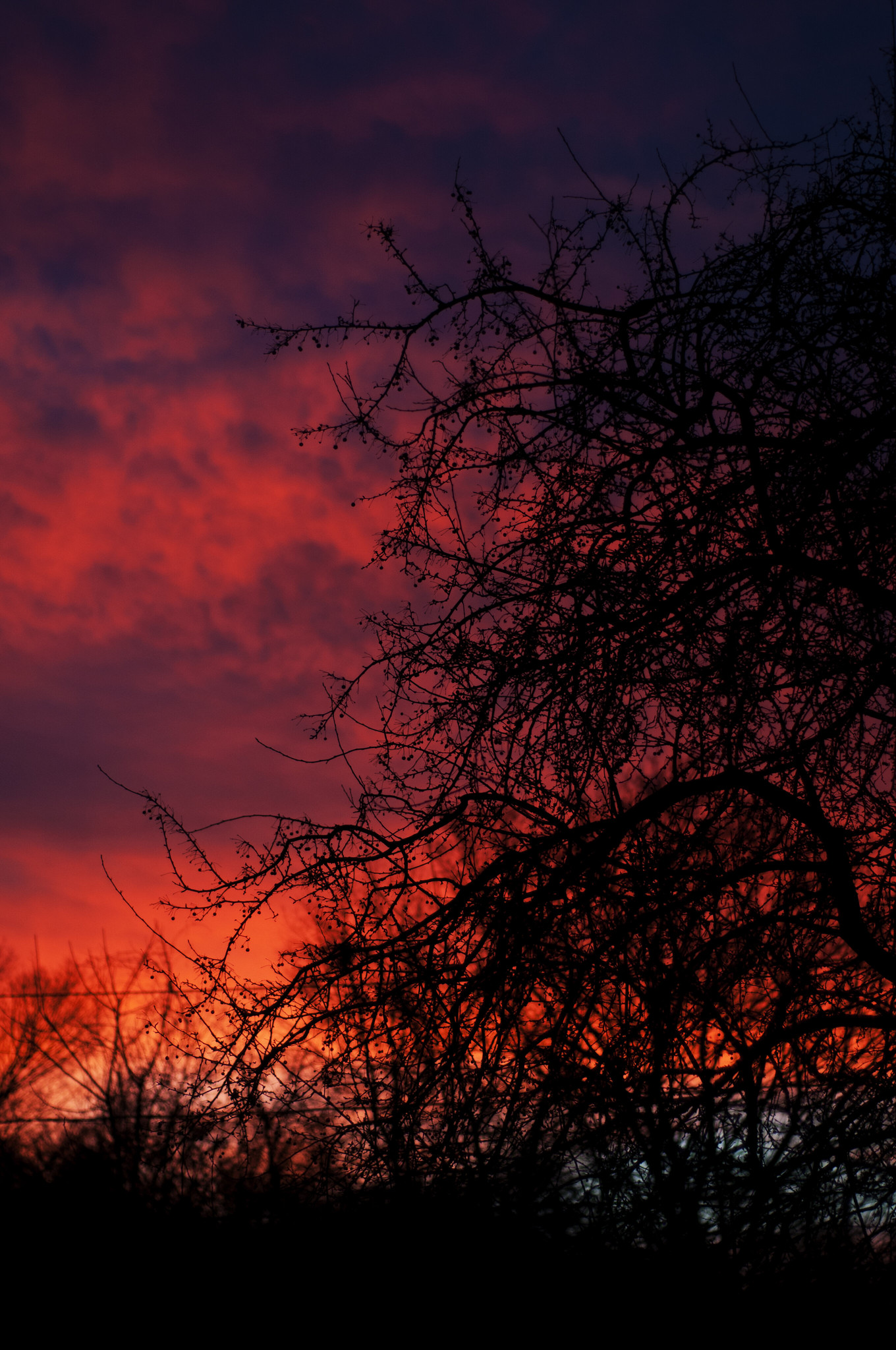 134130 download wallpaper Nature, Sunset, Branches, Dark screensavers and pictures for free