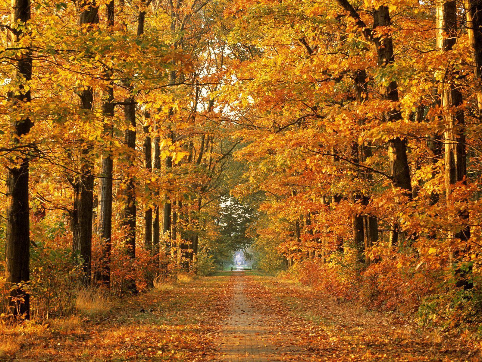 65557 скачать обои Осень, Октябрь, Листопад, Природа, Деревья, Дорога, Аллея, Путь - заставки и картинки бесплатно