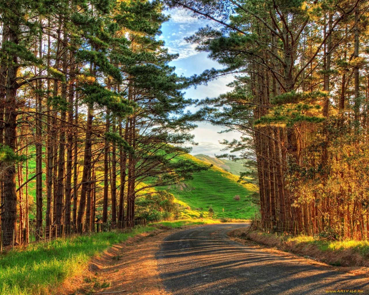 17150 скачать обои Пейзаж, Деревья, Дороги - заставки и картинки бесплатно