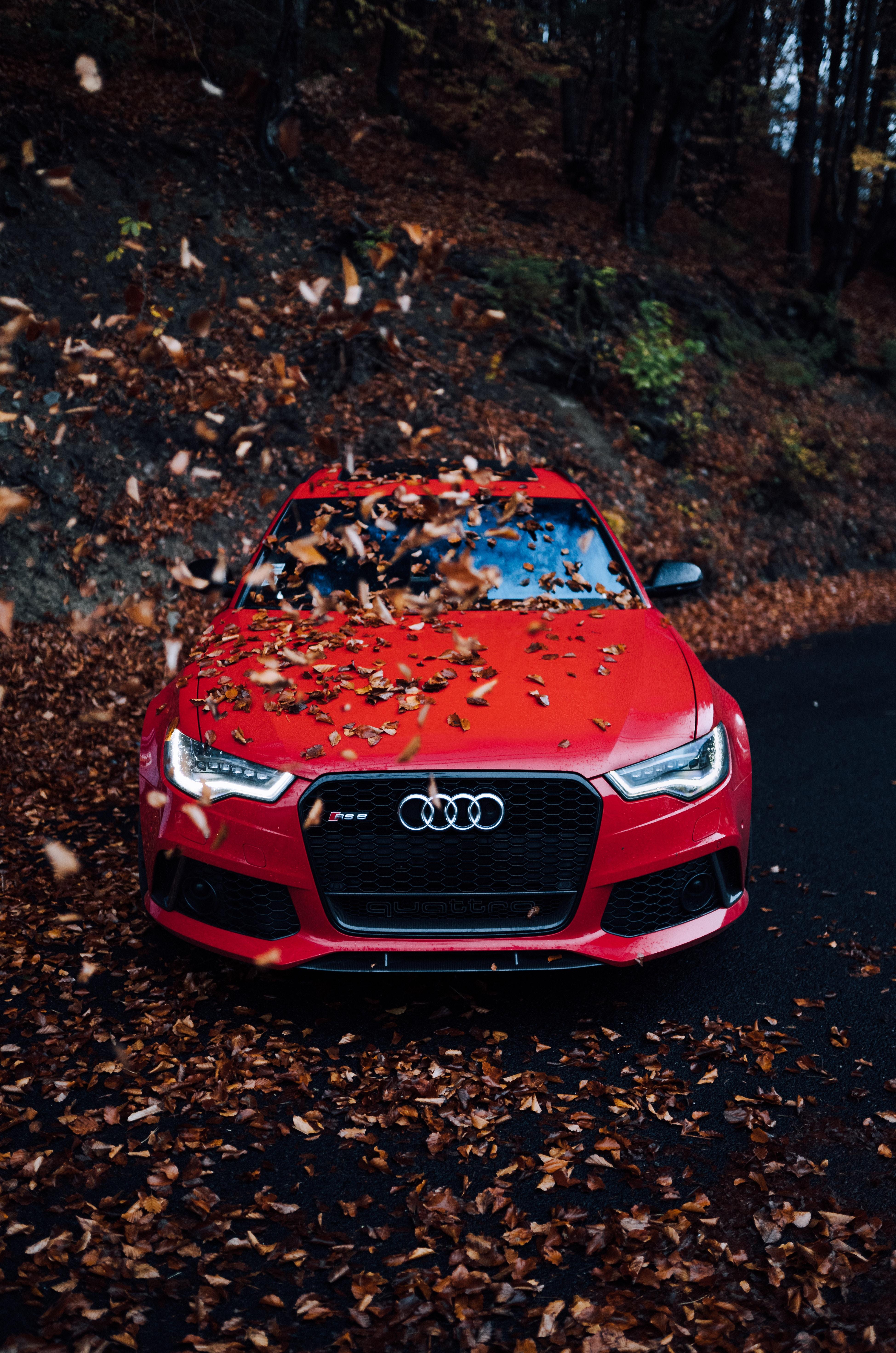 71441 скачать обои Ауди (Audi), Тачки (Cars), Осень, Красный, Автомобиль, Вид Спереди, Бампер, Листва - заставки и картинки бесплатно
