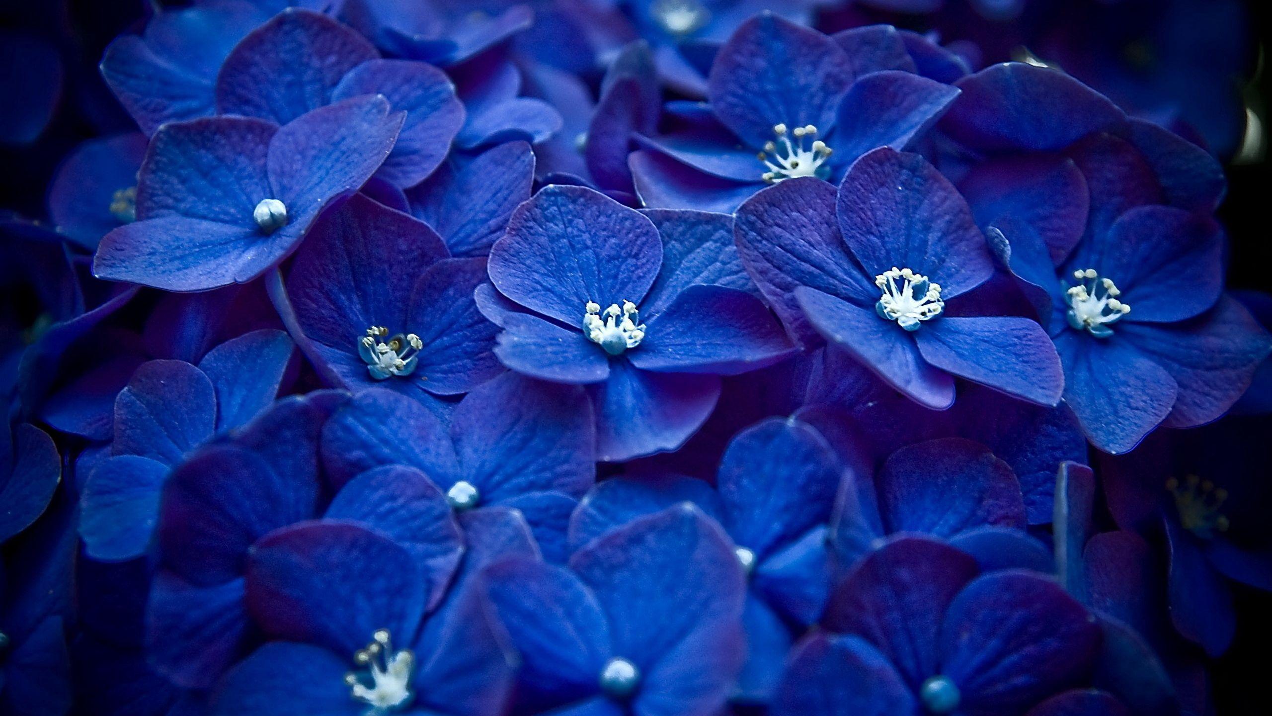 53478 скачать обои Цветы, Яркие, Много, Маленькие - заставки и картинки бесплатно