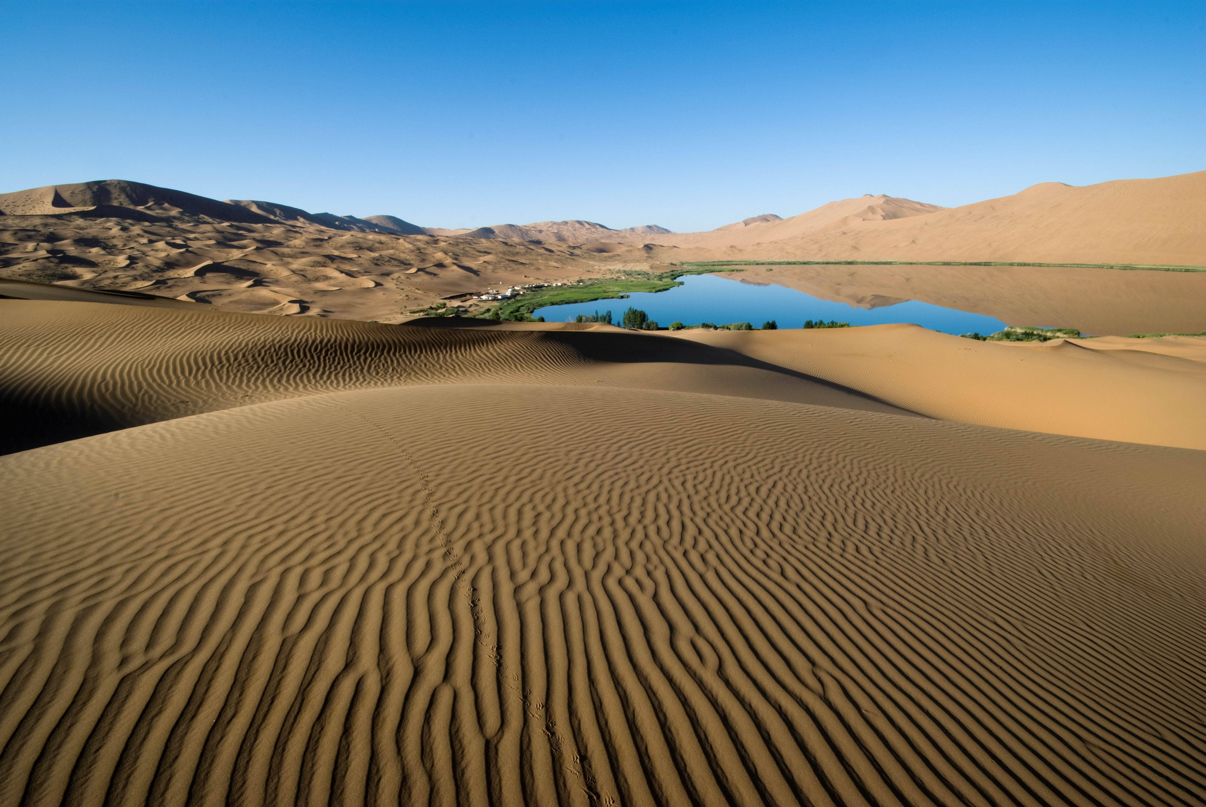 61760 download wallpaper Desert, Patterns, Nature, Sand, Lake, Shore, Lines, Vegetation, Shores, Oasis screensavers and pictures for free