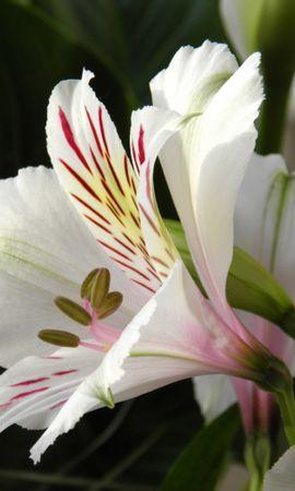 25513 скачать обои Растения, Цветы - заставки и картинки бесплатно