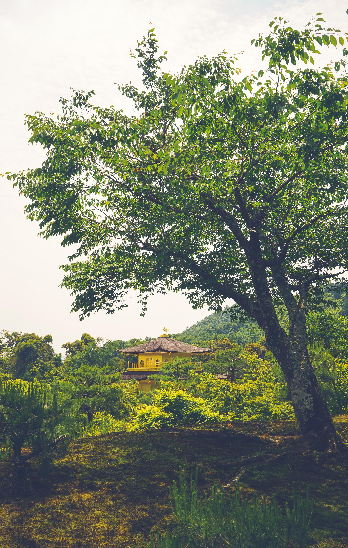133635 免費下載壁紙 杂项, 宝塔, 寺庙, 神殿, 建造, 建筑, 树, 性质 屏保和圖片