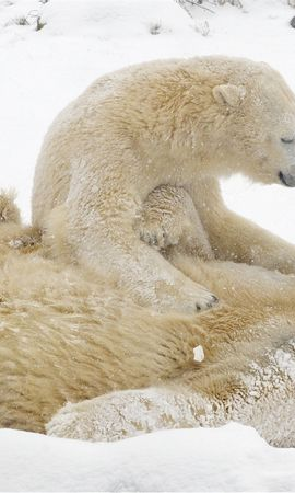119369 download wallpaper Animals, White Bears, Polar Bears, Bears, Snow, Winter, Games screensavers and pictures for free