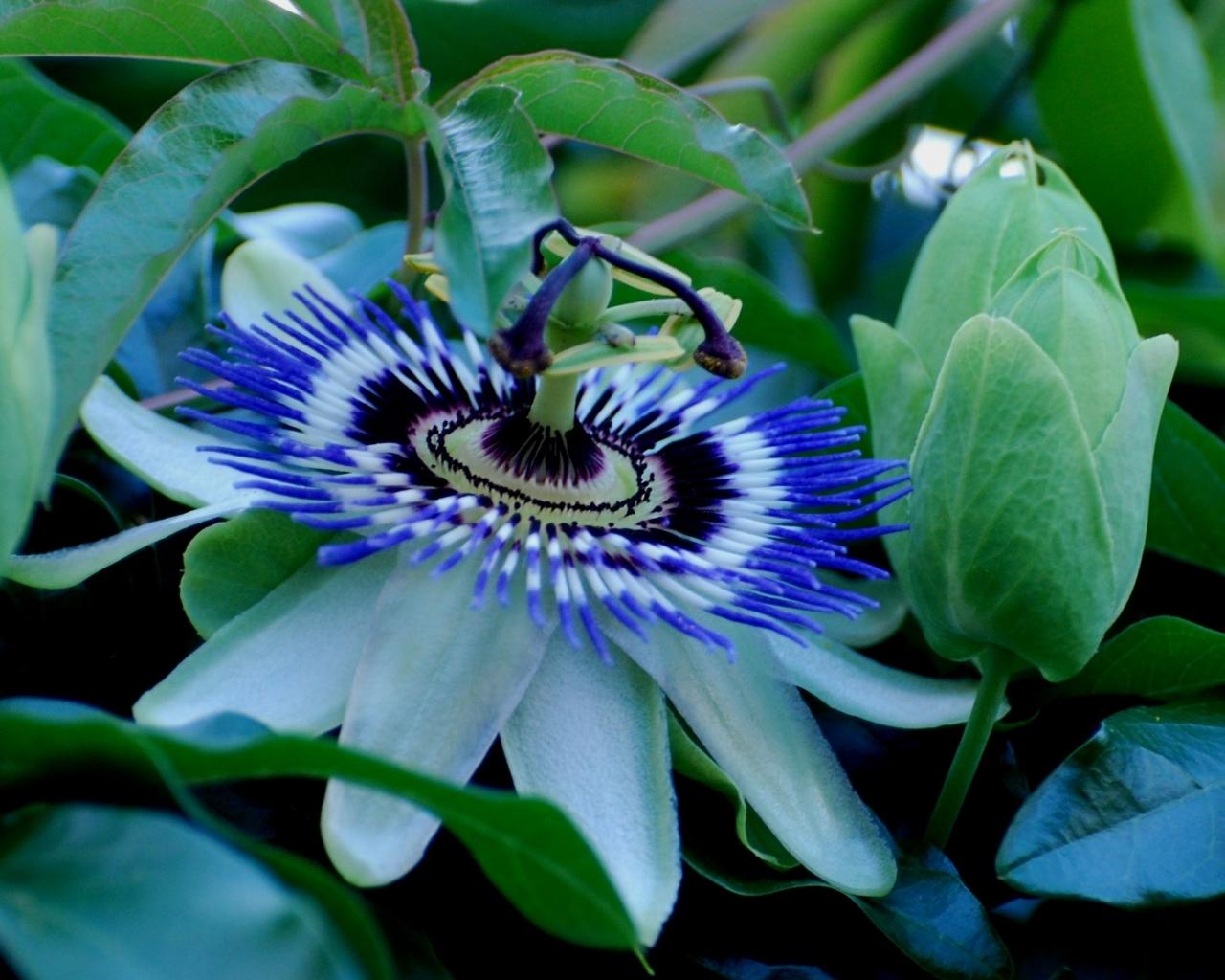 3506 скачать обои Растения, Цветы - заставки и картинки бесплатно