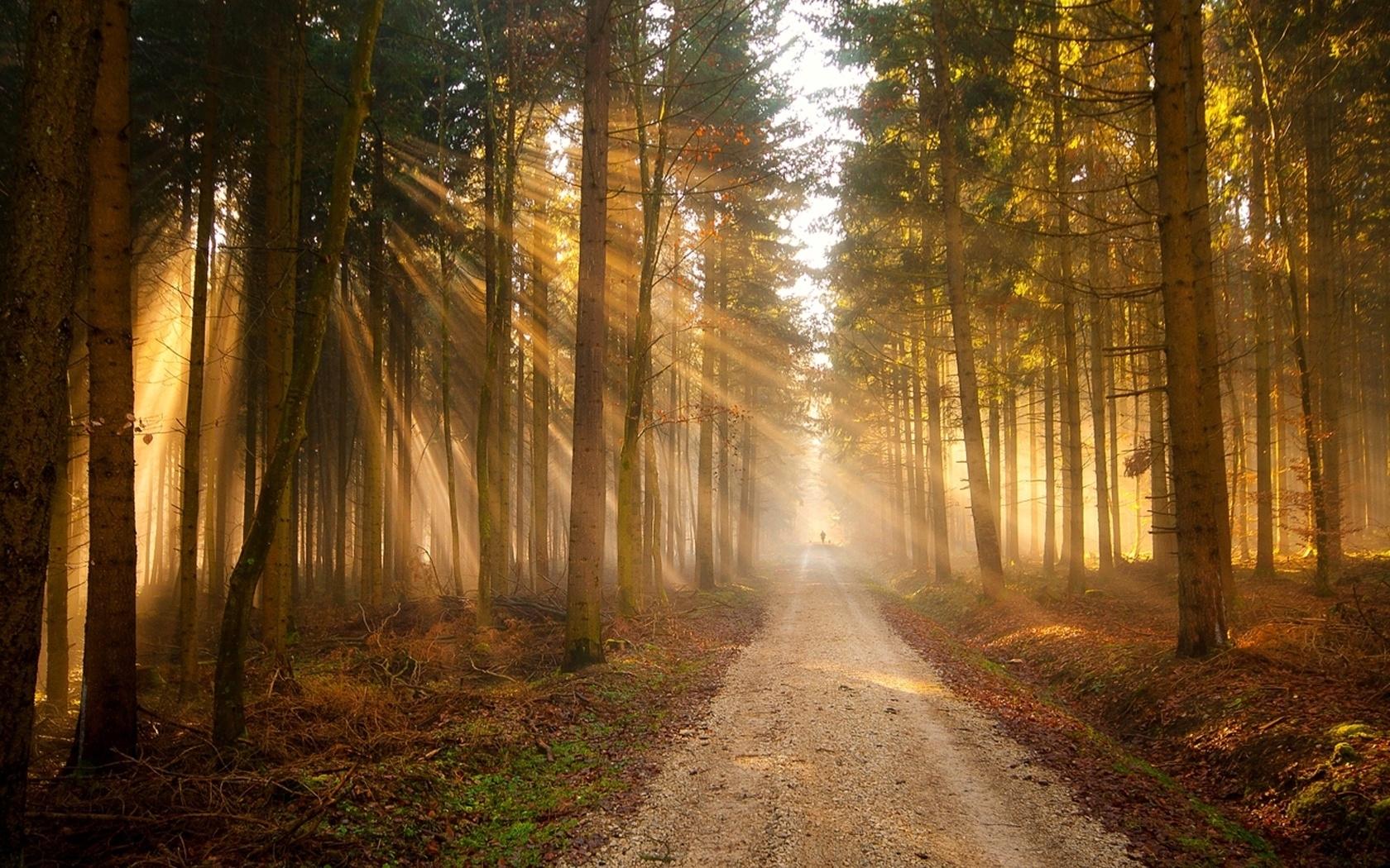 23886 скачать обои Пейзаж, Деревья, Дороги, Солнце - заставки и картинки бесплатно