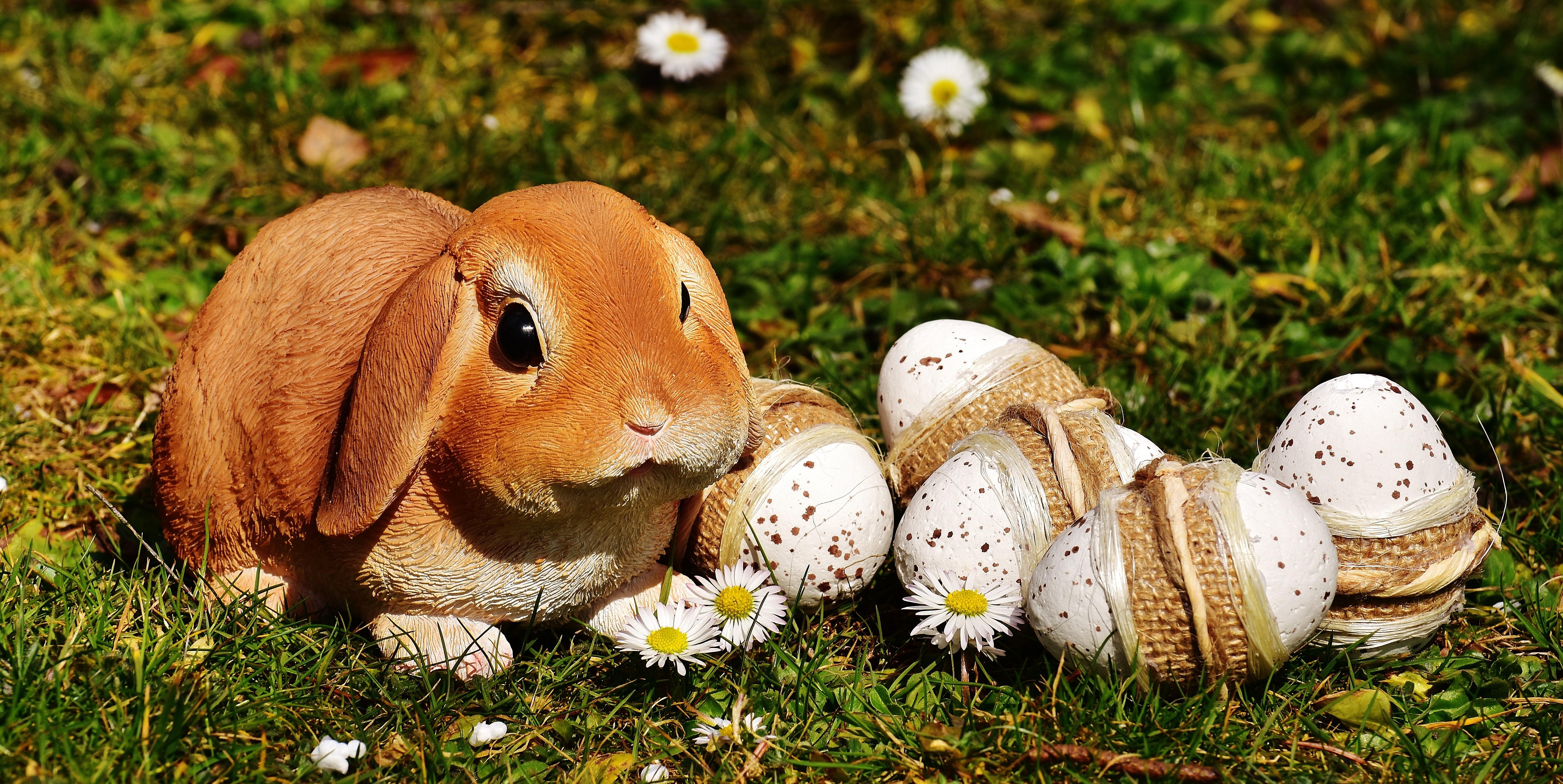69502 descargar fondo de pantalla Vacaciones, Conejo, Pascua, Huevos: protectores de pantalla e imágenes gratis