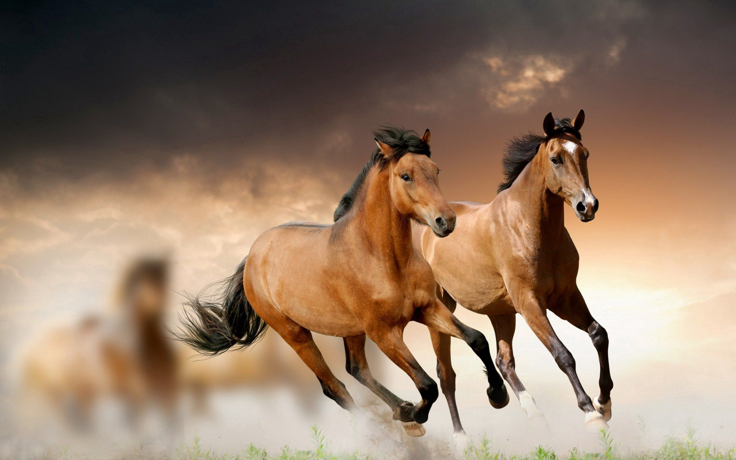 79808 download wallpaper Horses, Animals, Grass, Clouds, Run, Running screensavers and pictures for free