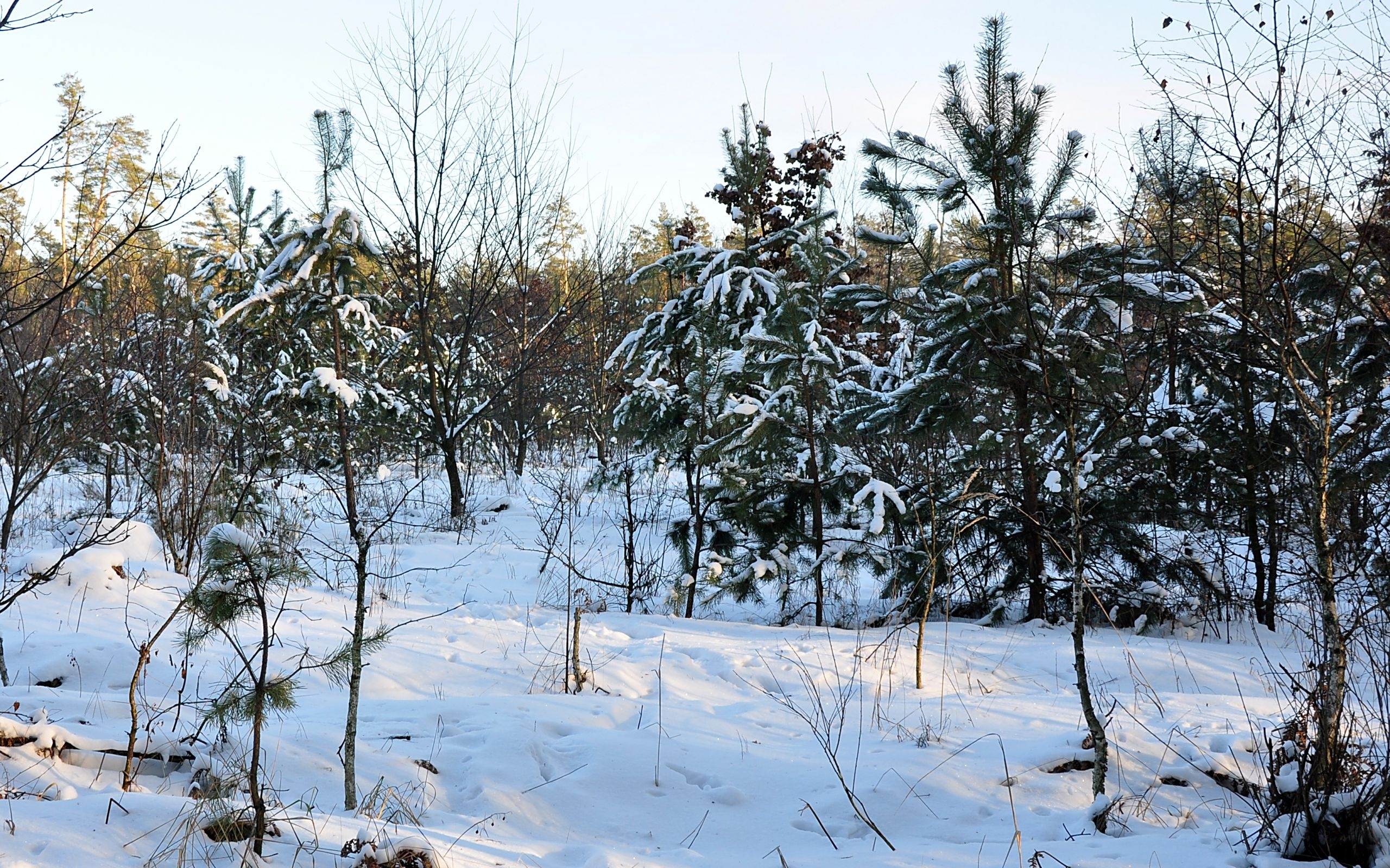 43150 download wallpaper Landscape, Winter screensavers and pictures for free