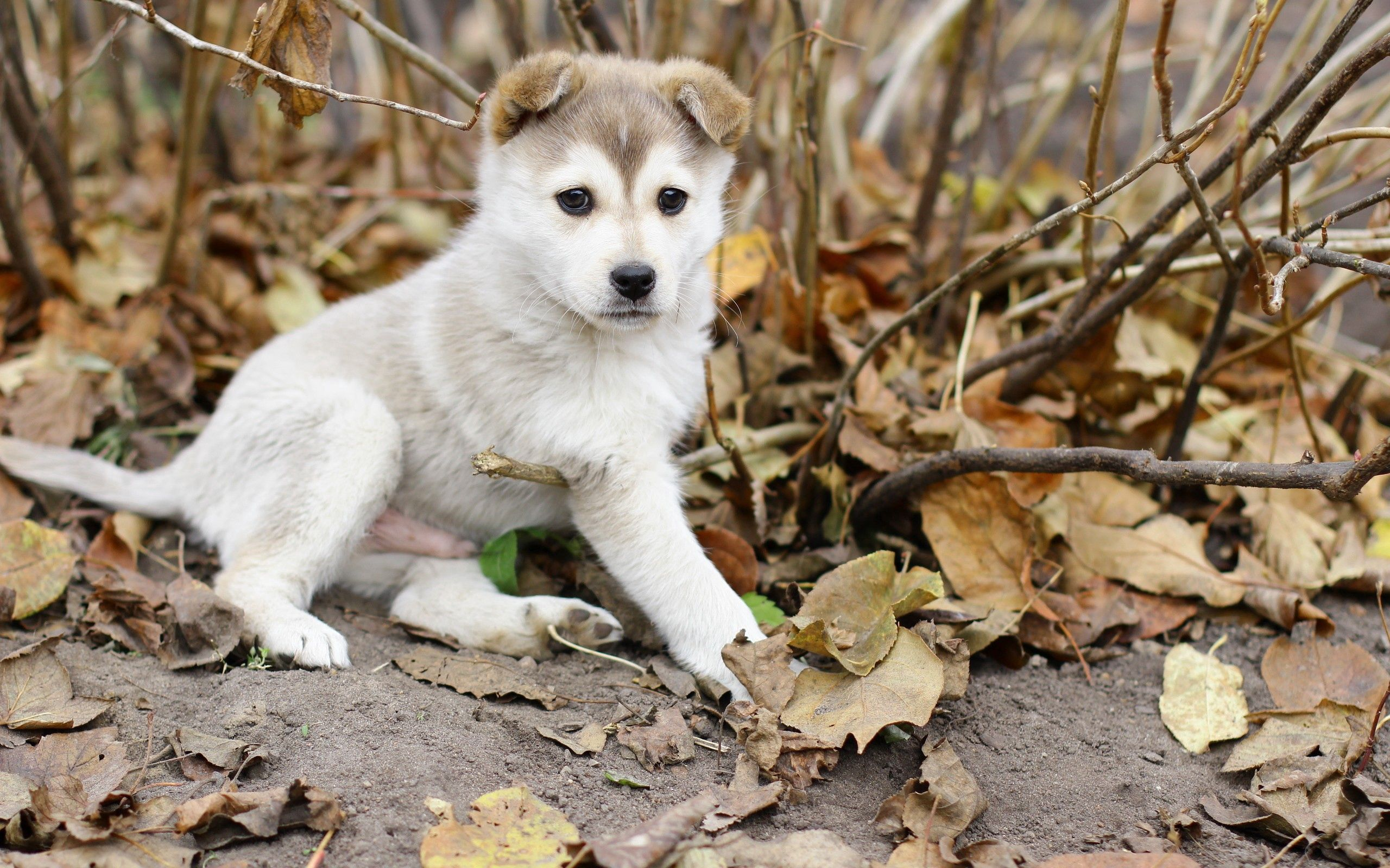 76142 download wallpaper Animals, Puppy, Kid, Tot, Leaves, Branches, Autumn screensavers and pictures for free