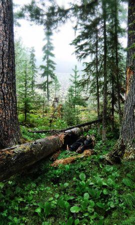 28054 скачать обои Пейзаж, Деревья - заставки и картинки бесплатно