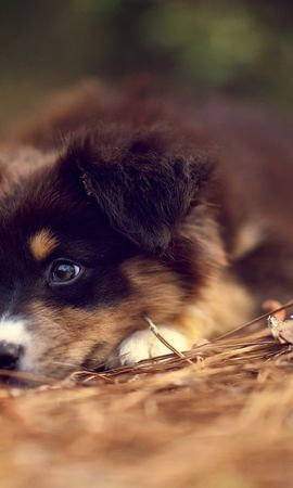 16220 download wallpaper Animals, Dogs, Art Photo screensavers and pictures for free