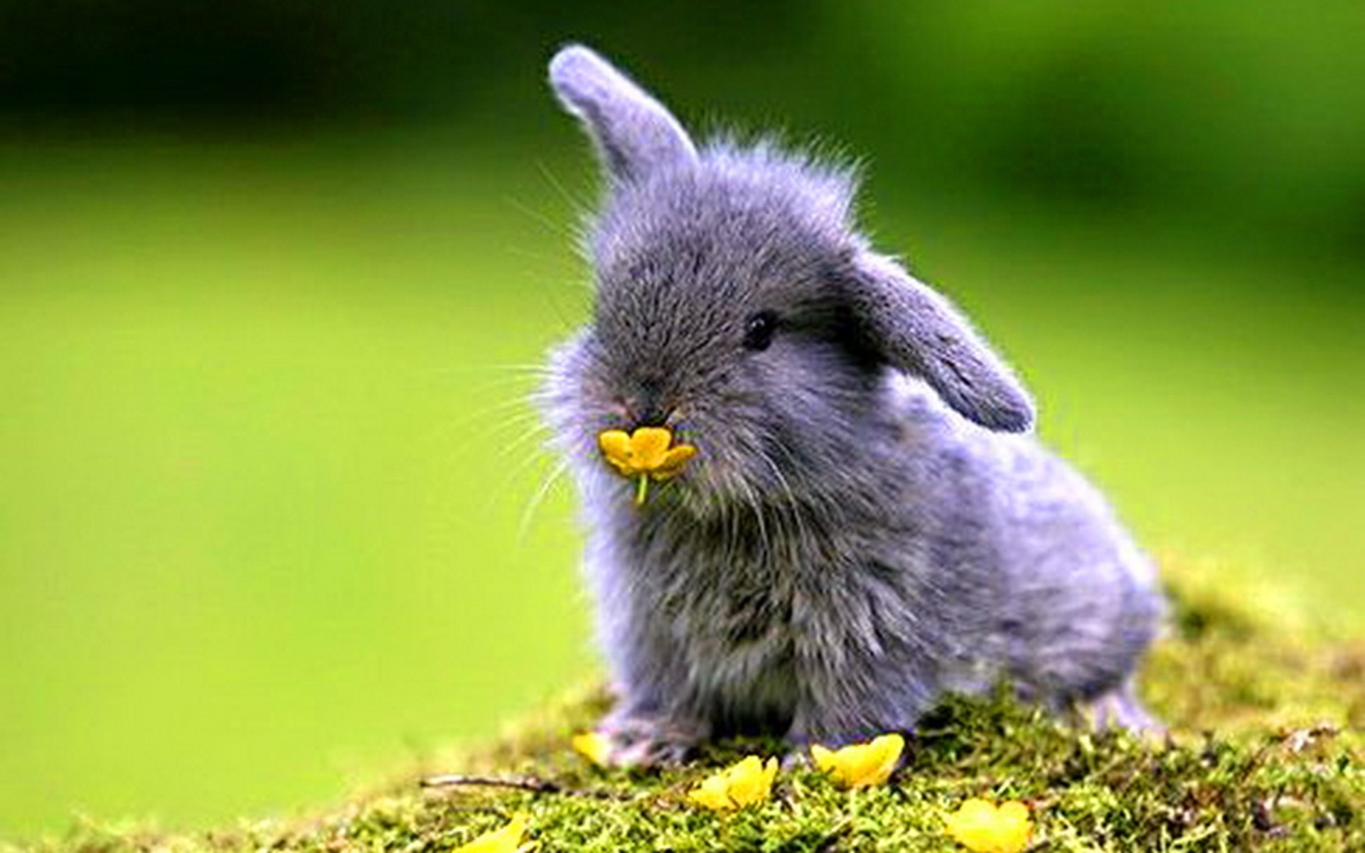 27370 download wallpaper Animals, Rabbits screensavers and pictures for free