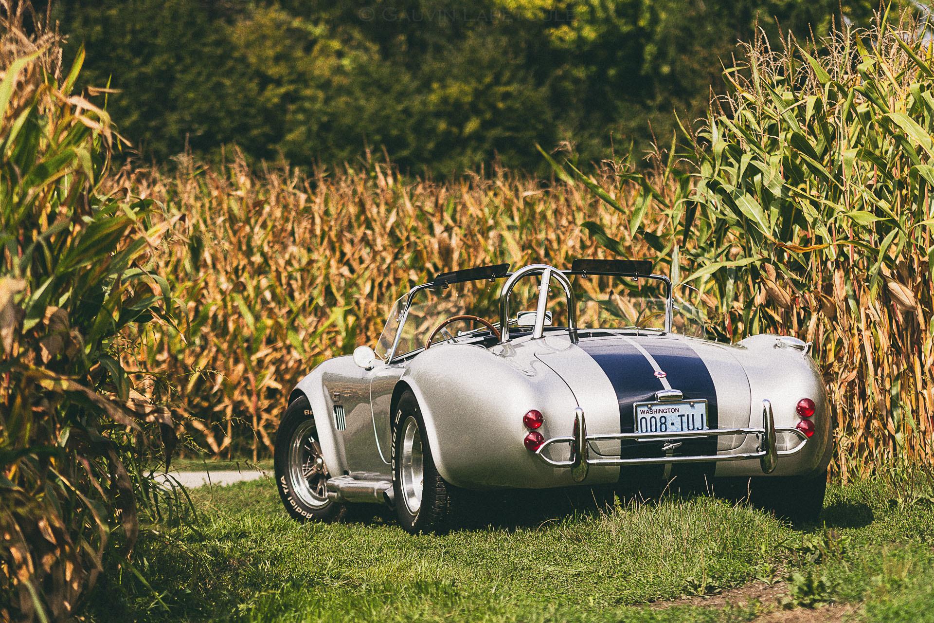 60807 скачать обои Машины, Кобра (Cobra), Тачки (Cars), Вид Сзади, Shelby - заставки и картинки бесплатно