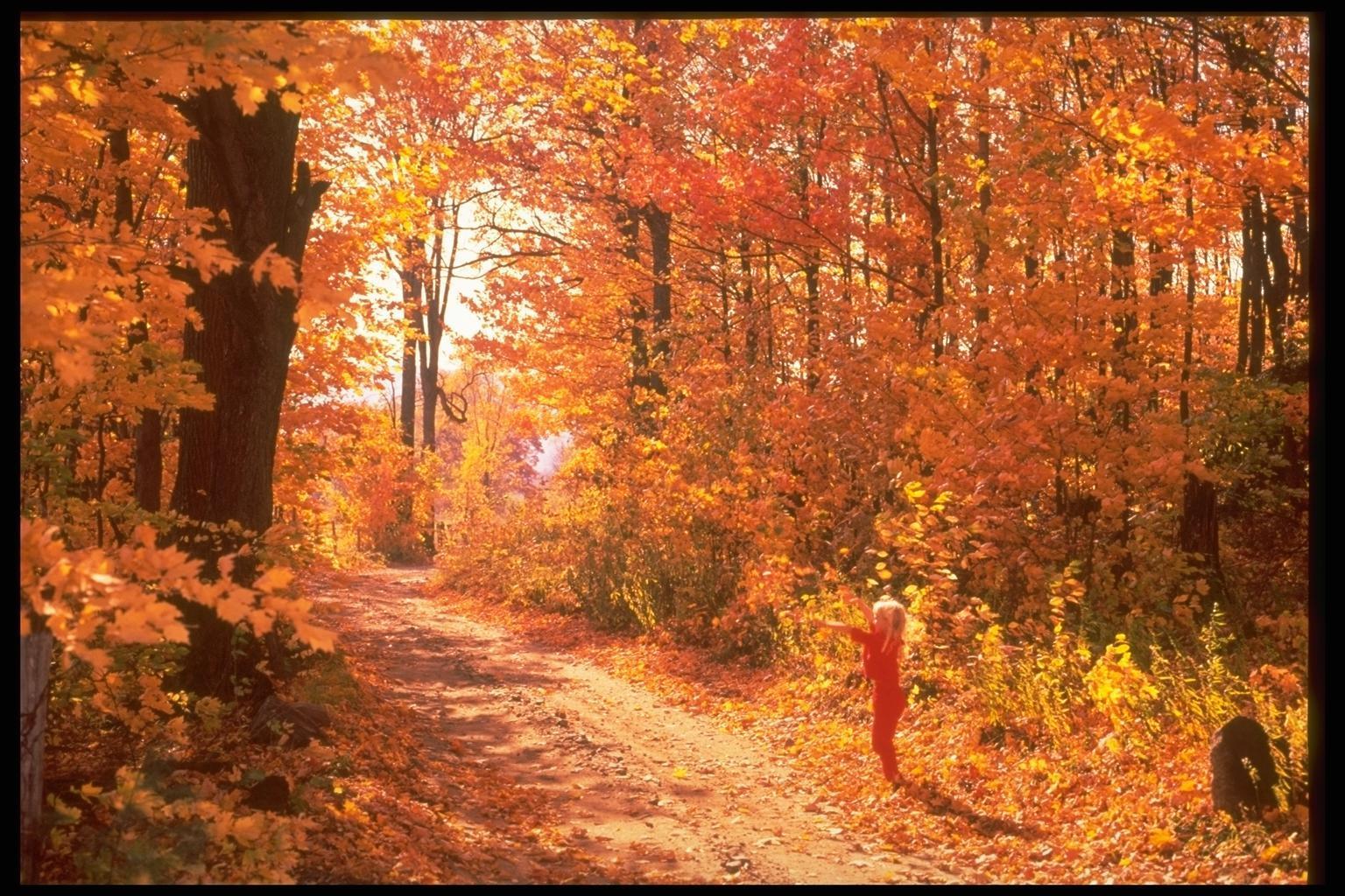 10940 скачать обои Пейзаж, Деревья, Дороги, Осень - заставки и картинки бесплатно