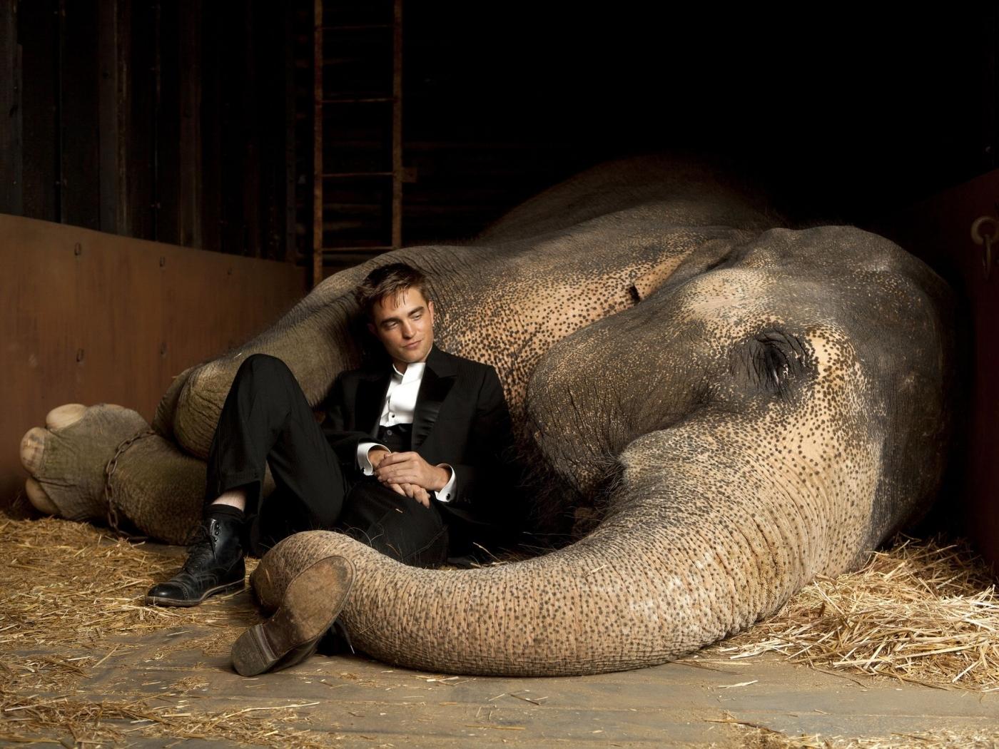 23865 descargar fondo de pantalla Cine, Animales, Personas, Actores, Hombres, Elefantes, Robert Pattinson: protectores de pantalla e imágenes gratis