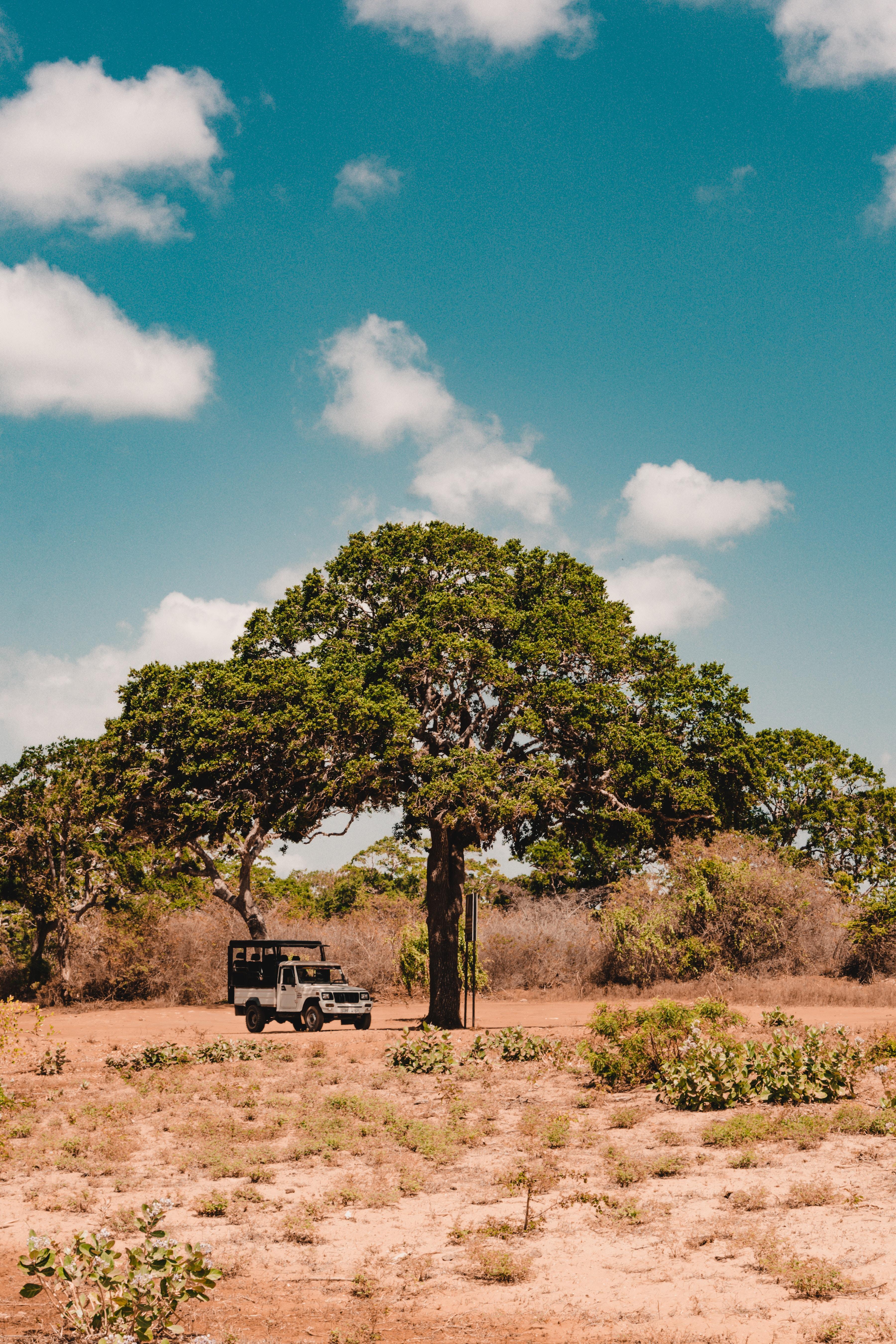 78555 download wallpaper Nature, Wood, Tree, Car, Machine, Savanna, Wildlife, Vegetation, Bush screensavers and pictures for free