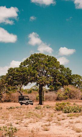 78555 скачать обои Природа, Дерево, Машина, Саванна, Дикая Природа, Растительность, Кусты - заставки и картинки бесплатно