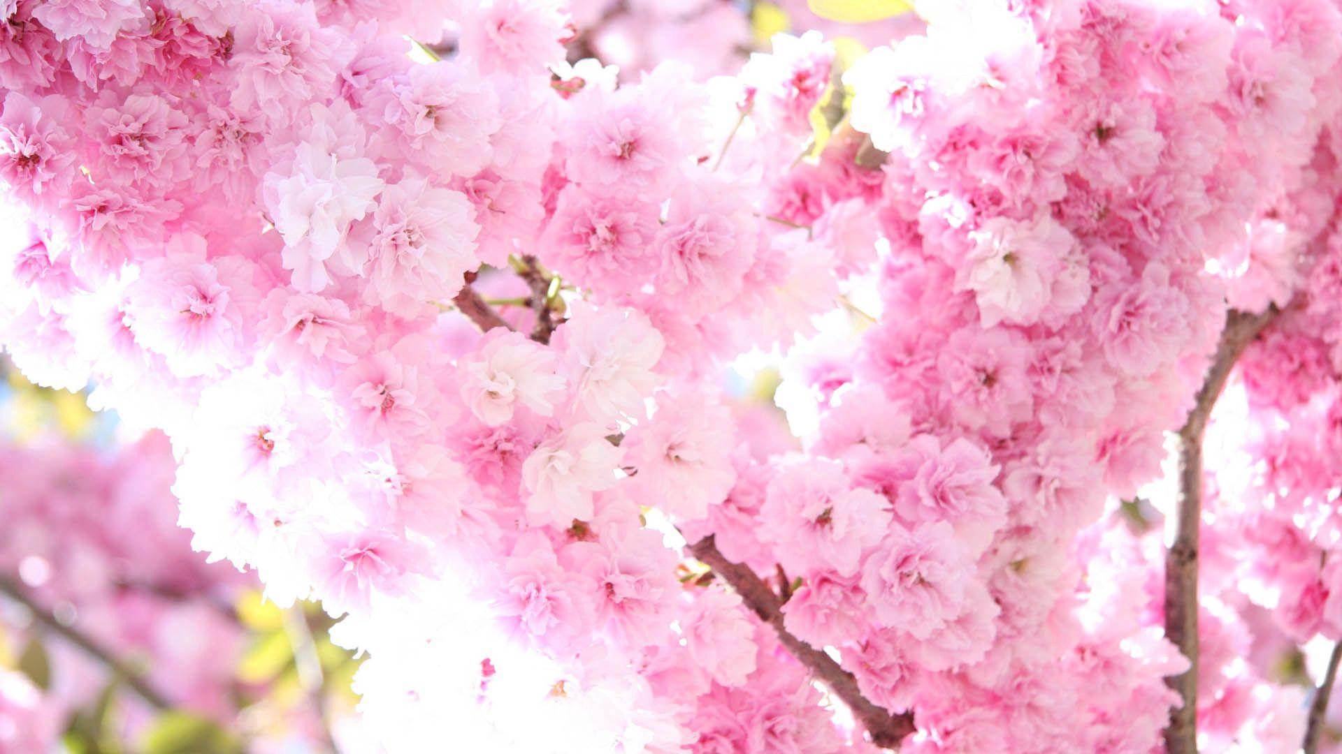 84988 скачать обои Цветы, Цветение, Весна, Растение - заставки и картинки бесплатно