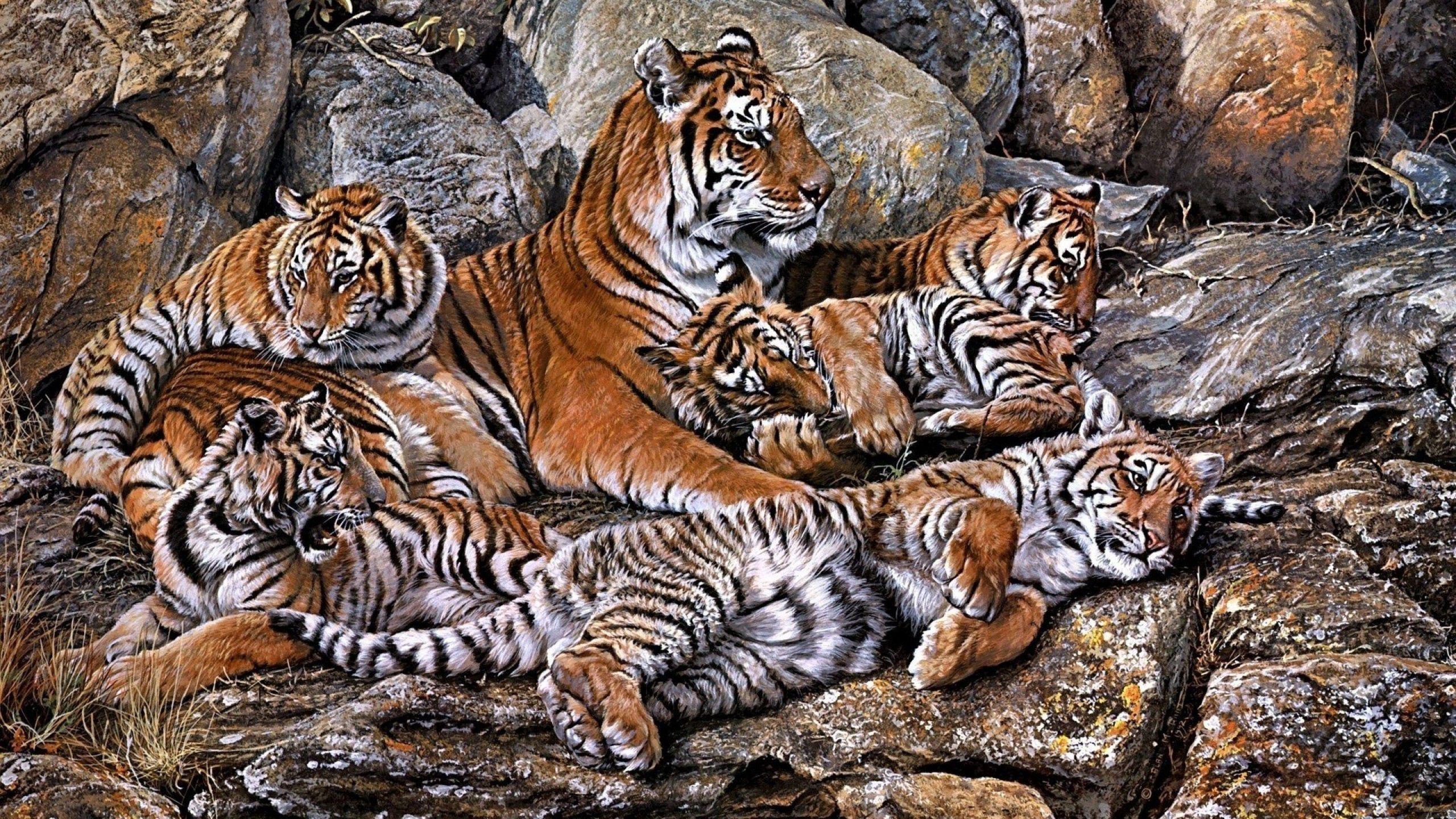 95649 Hintergrundbild herunterladen Raubtiere, Tiere, Tigers, Hdr, Jungen, Jung - Bildschirmschoner und Bilder kostenlos