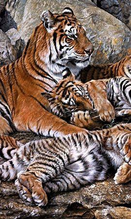95649壁紙のダウンロード動物, 捕食者, 捕食 者, カブス, 若い, Hdr, 阪神タイガース-スクリーンセーバーと写真を無料で