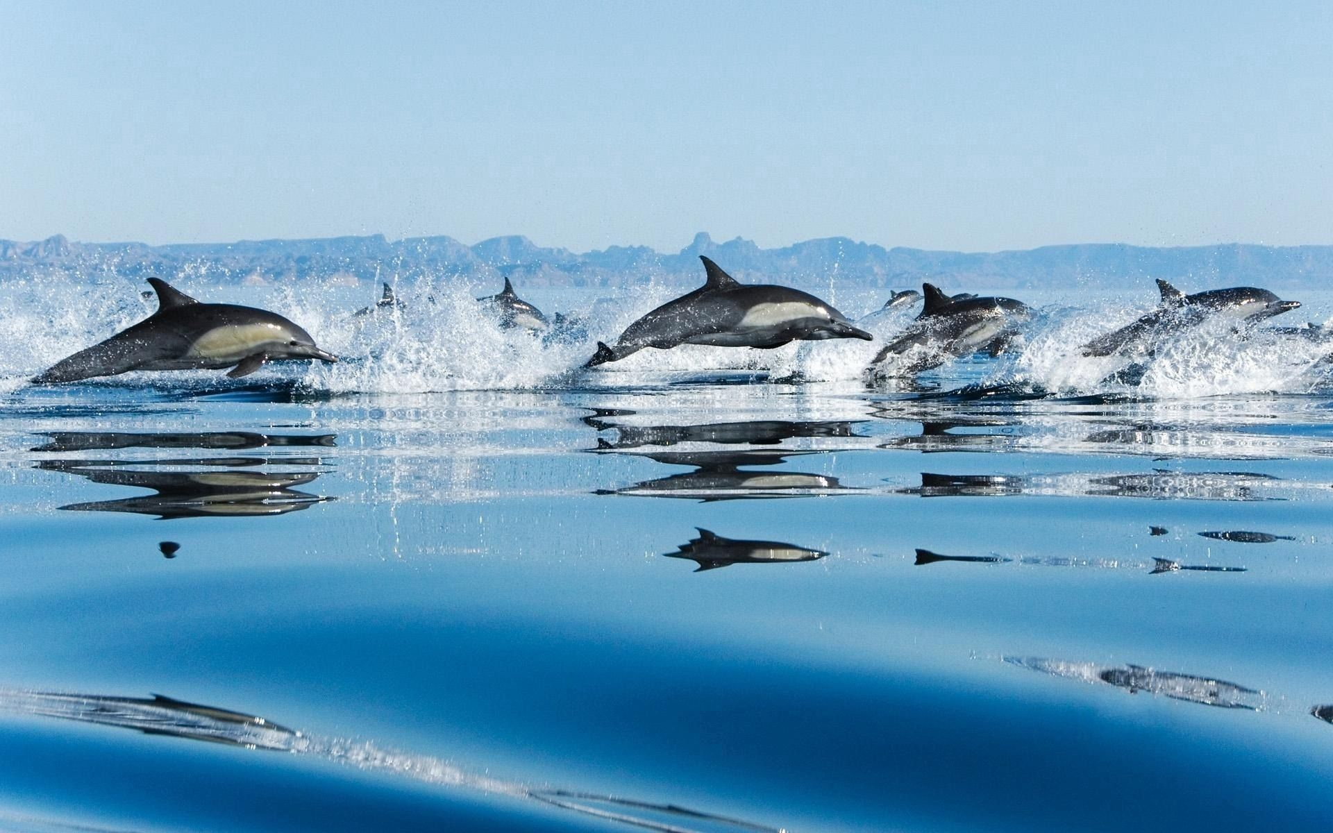111895 download wallpaper Animals, Dolfins, Sea, Spray, Flock, Bounce, Jump screensavers and pictures for free