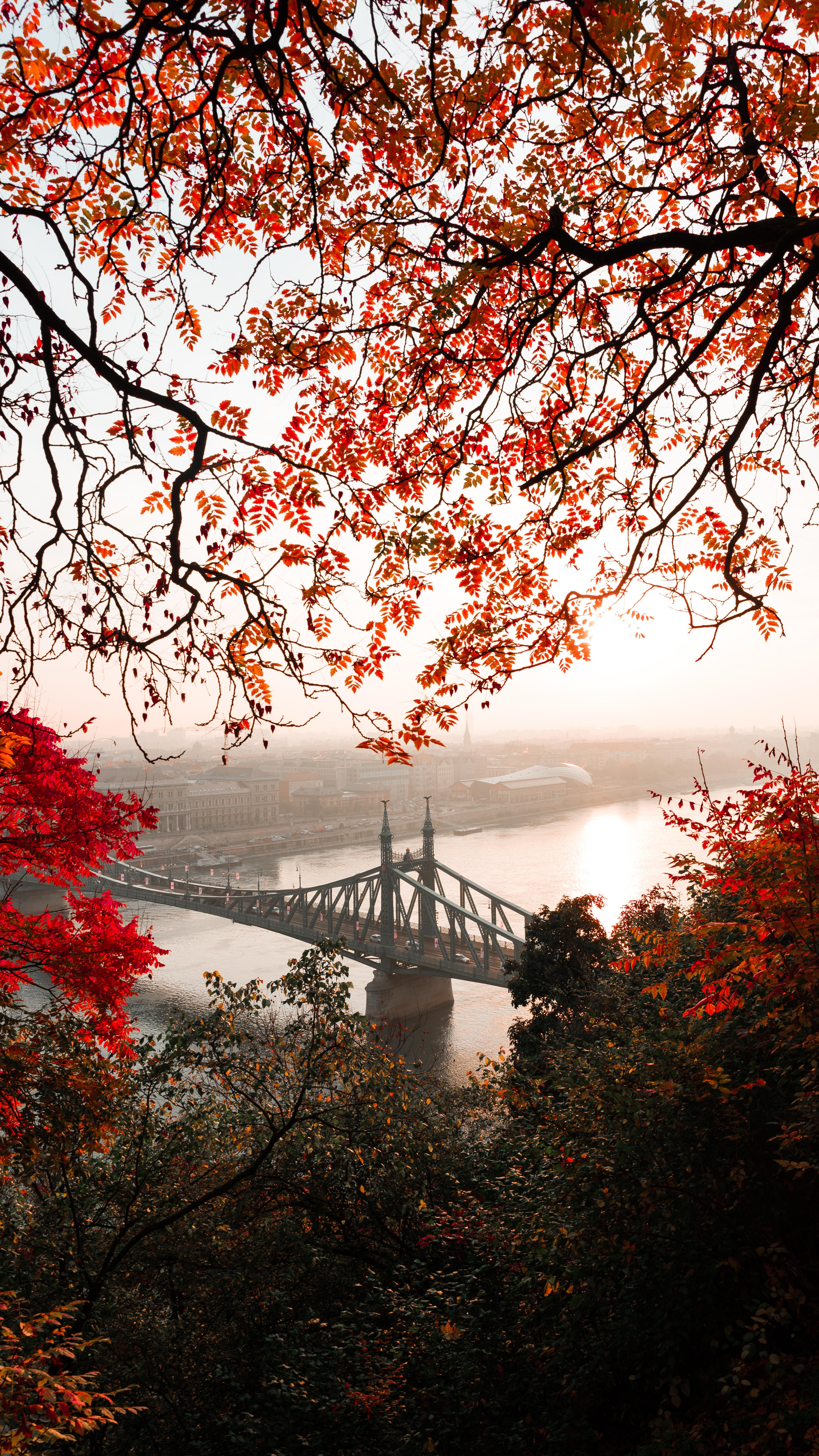 134435 Заставки и Обои Города на телефон. Скачать Мост, Осень, Город, Цитадель, Будапешт, Венгрия, Города картинки бесплатно