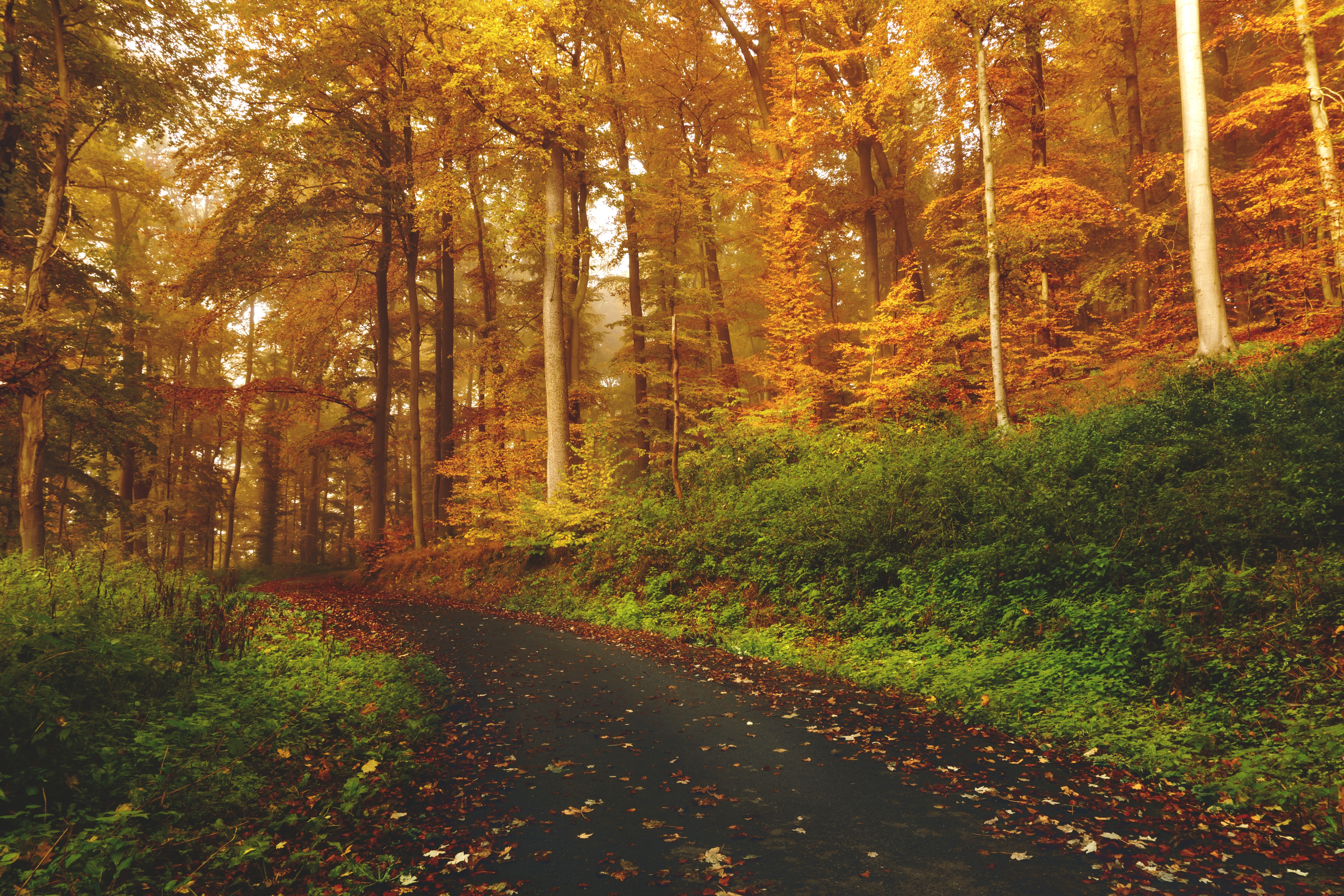 60151 Screensavers and Wallpapers Path for phone. Download Nature, Trees, Autumn, Forest, Path pictures for free