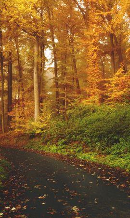 60151 Заставки и Обои Деревья на телефон. Скачать Природа, Осень, Деревья, Лес, Тропинка картинки бесплатно