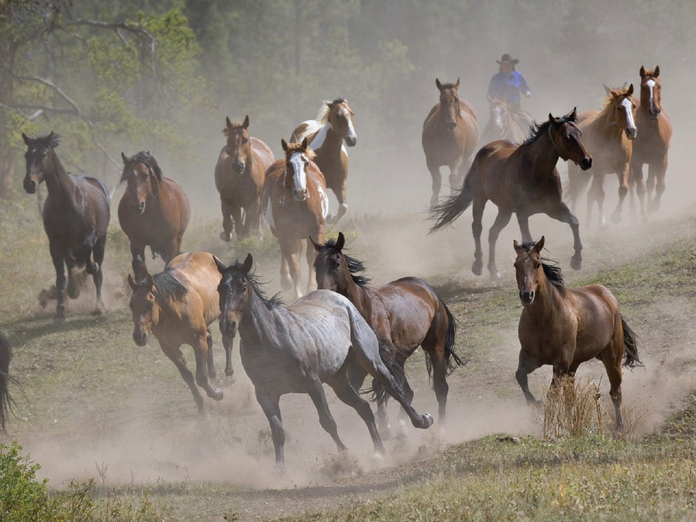36081 download wallpaper Horses, Animals screensavers and pictures for free