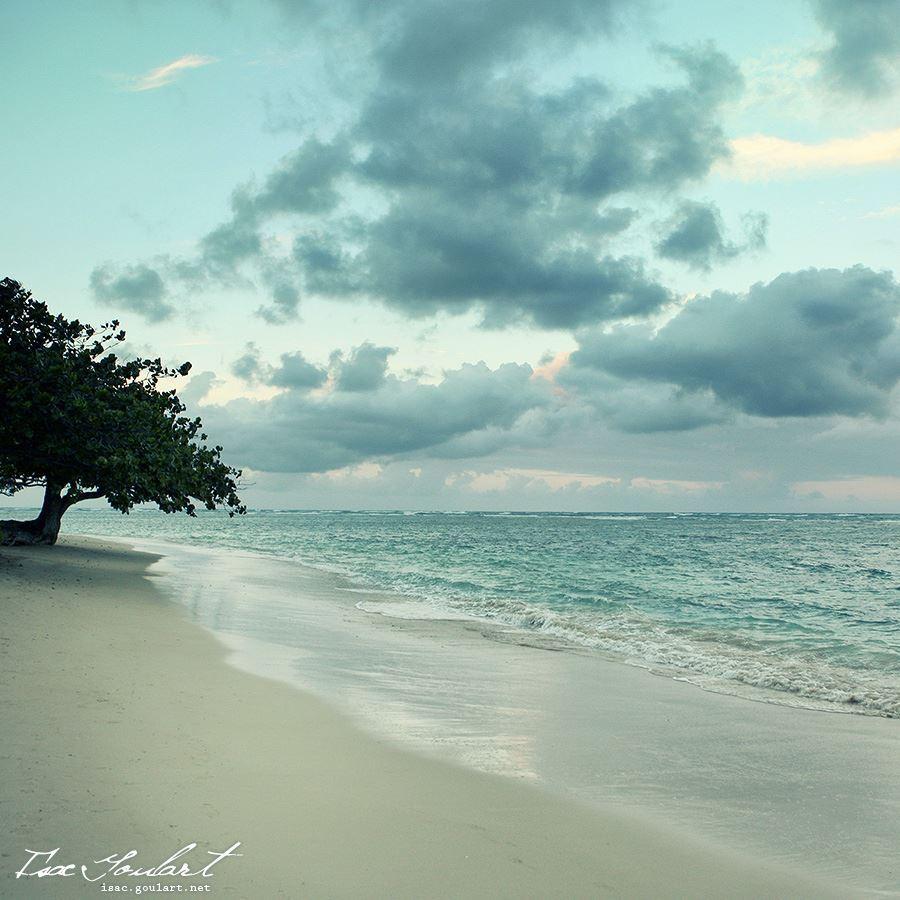19642 скачать обои Пейзаж, Деревья, Небо, Море, Облака, Пляж - заставки и картинки бесплатно