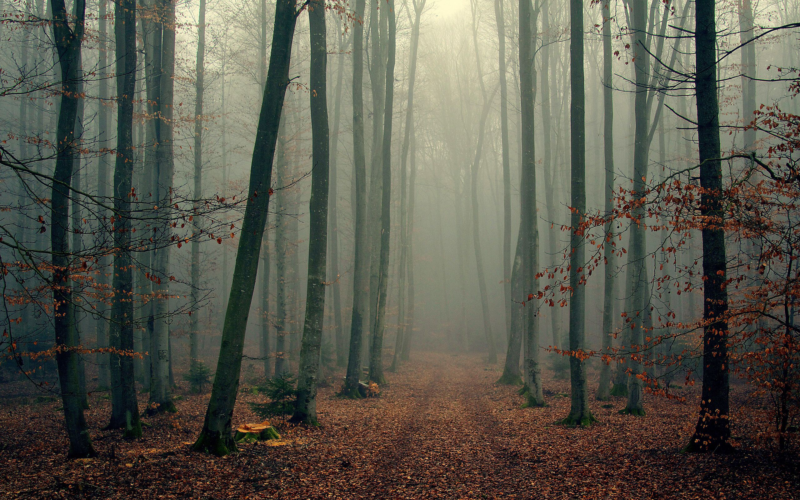 94435 download wallpaper Nature, Trees, Autumn, Forest, Fog, Cool, Foliage, Coolness screensavers and pictures for free