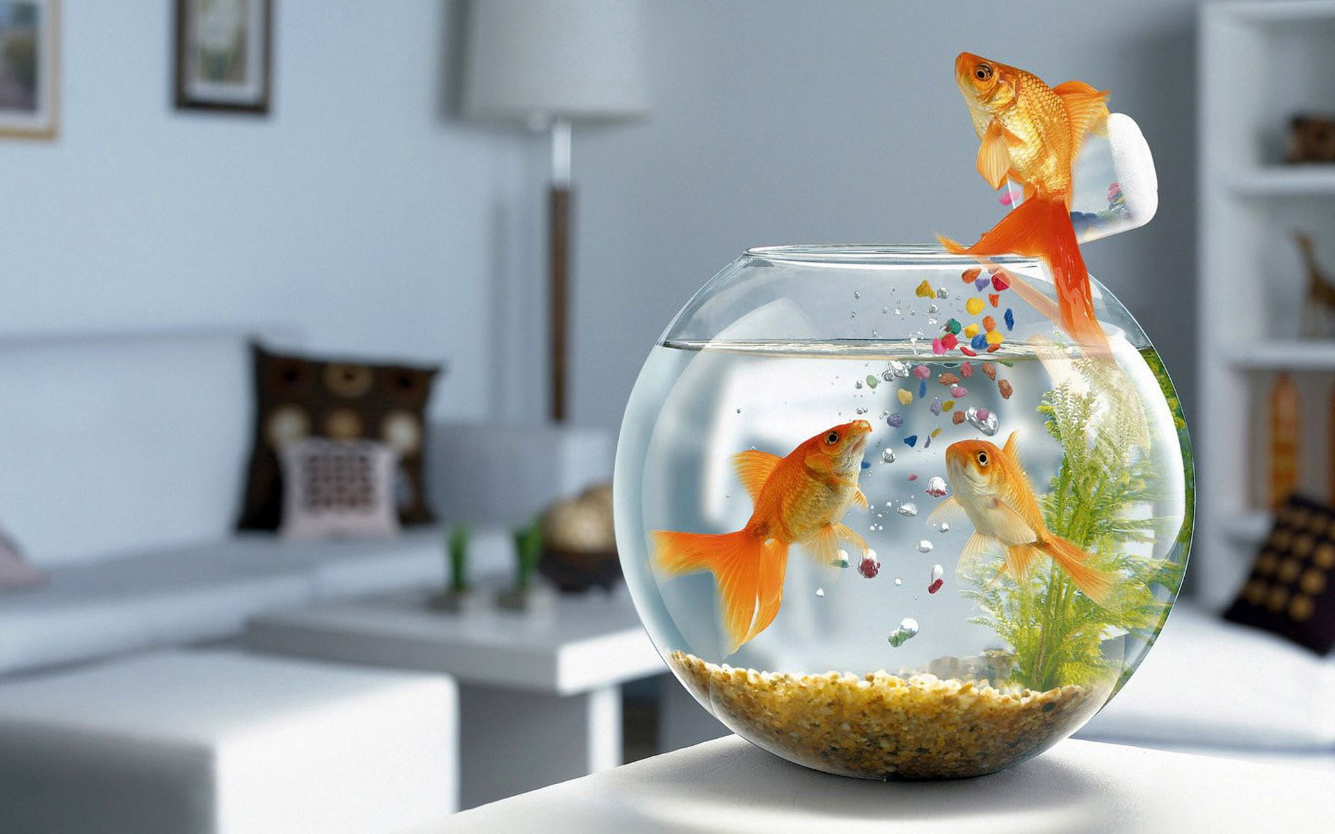 108178 download wallpaper Animals, Aquarium, To Swim, Swim, Table, Glass, Fishes screensavers and pictures for free