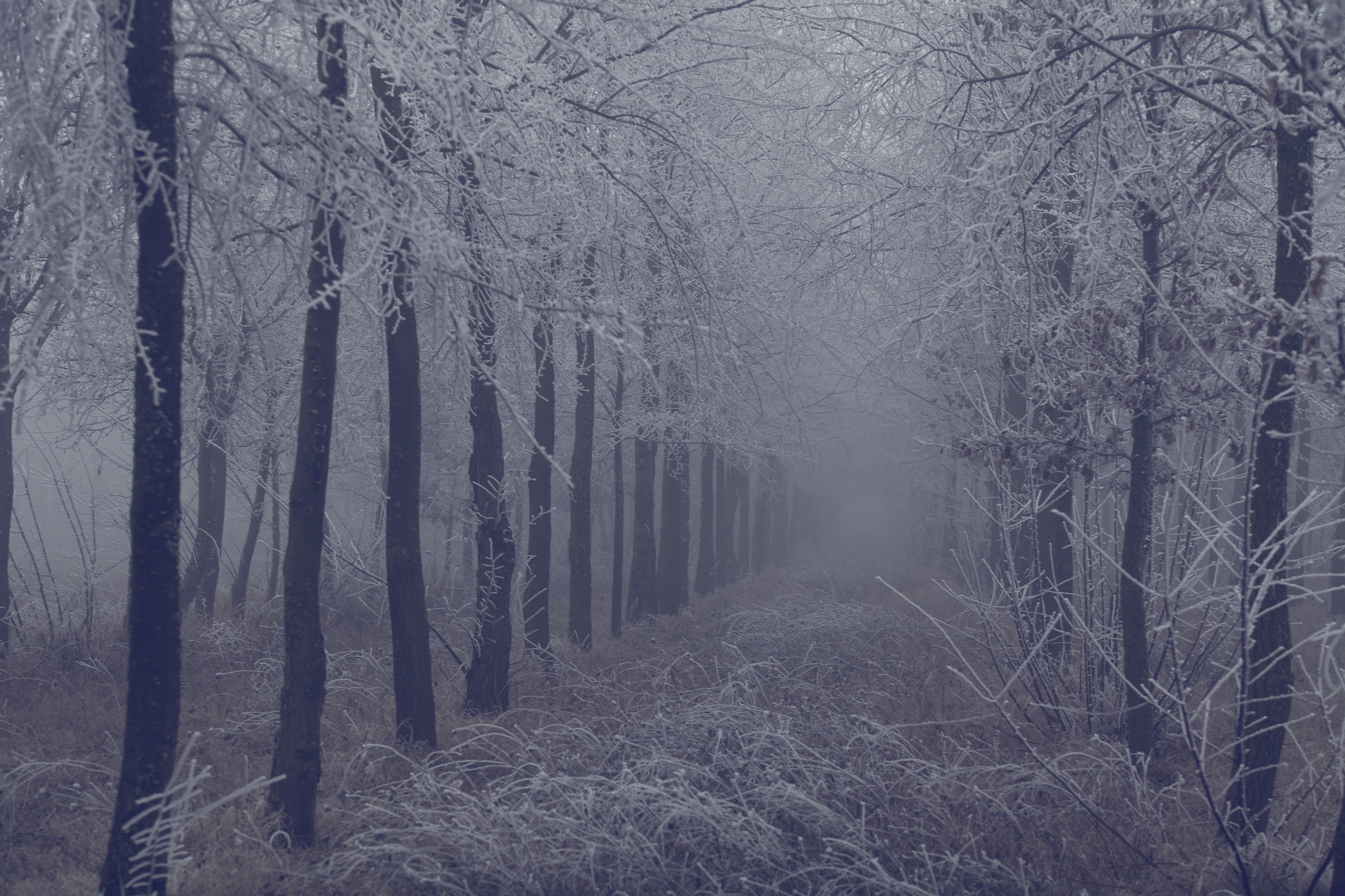 79389 Screensavers and Wallpapers Branches for phone. Download Nature, Trees, Grass, Forest, Fog, Branches, Frost, Hoarfrost pictures for free