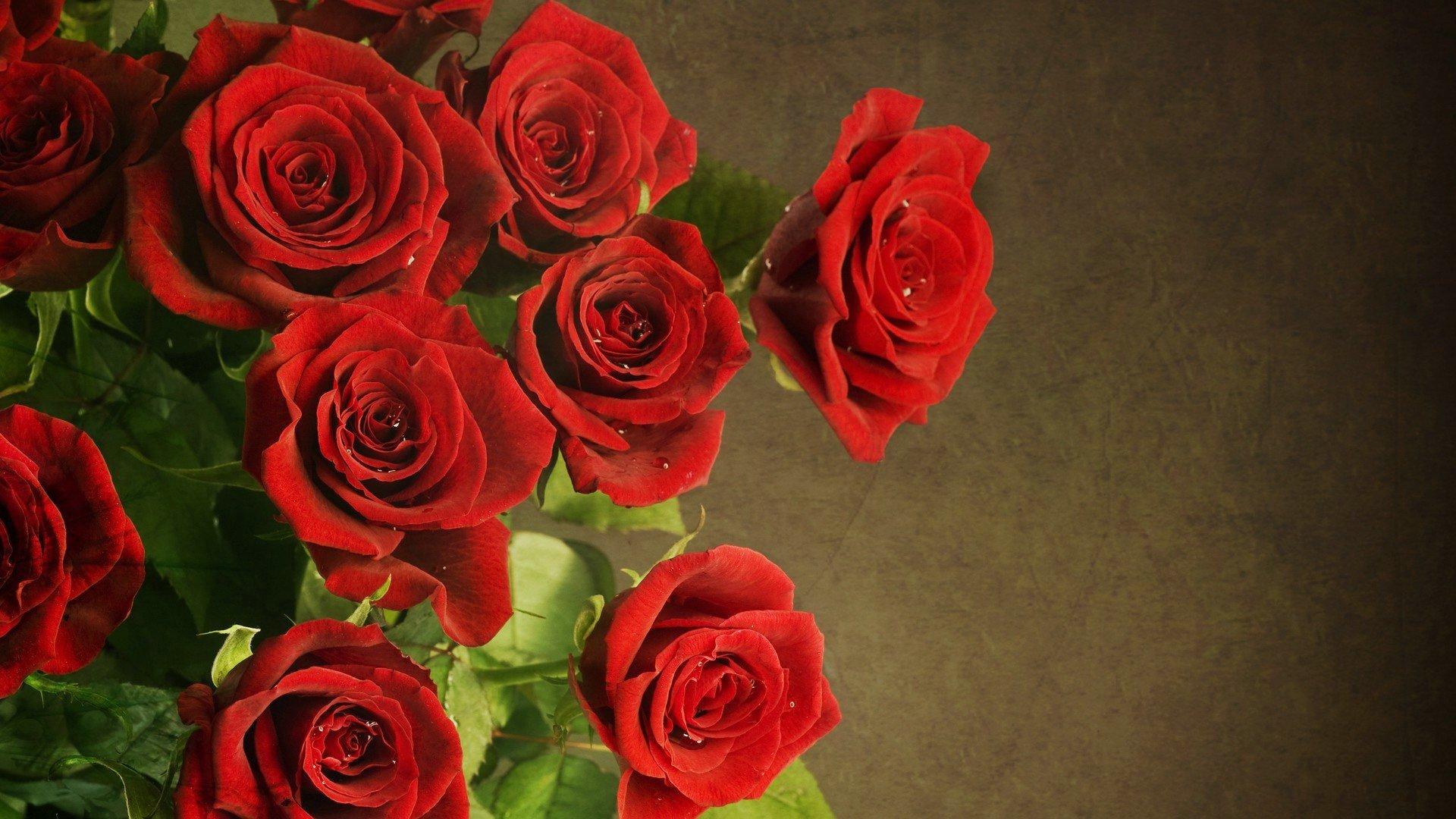 22365 télécharger le fond d'écran Plantes, Fleurs, Roses - économiseurs d'écran et images gratuitement